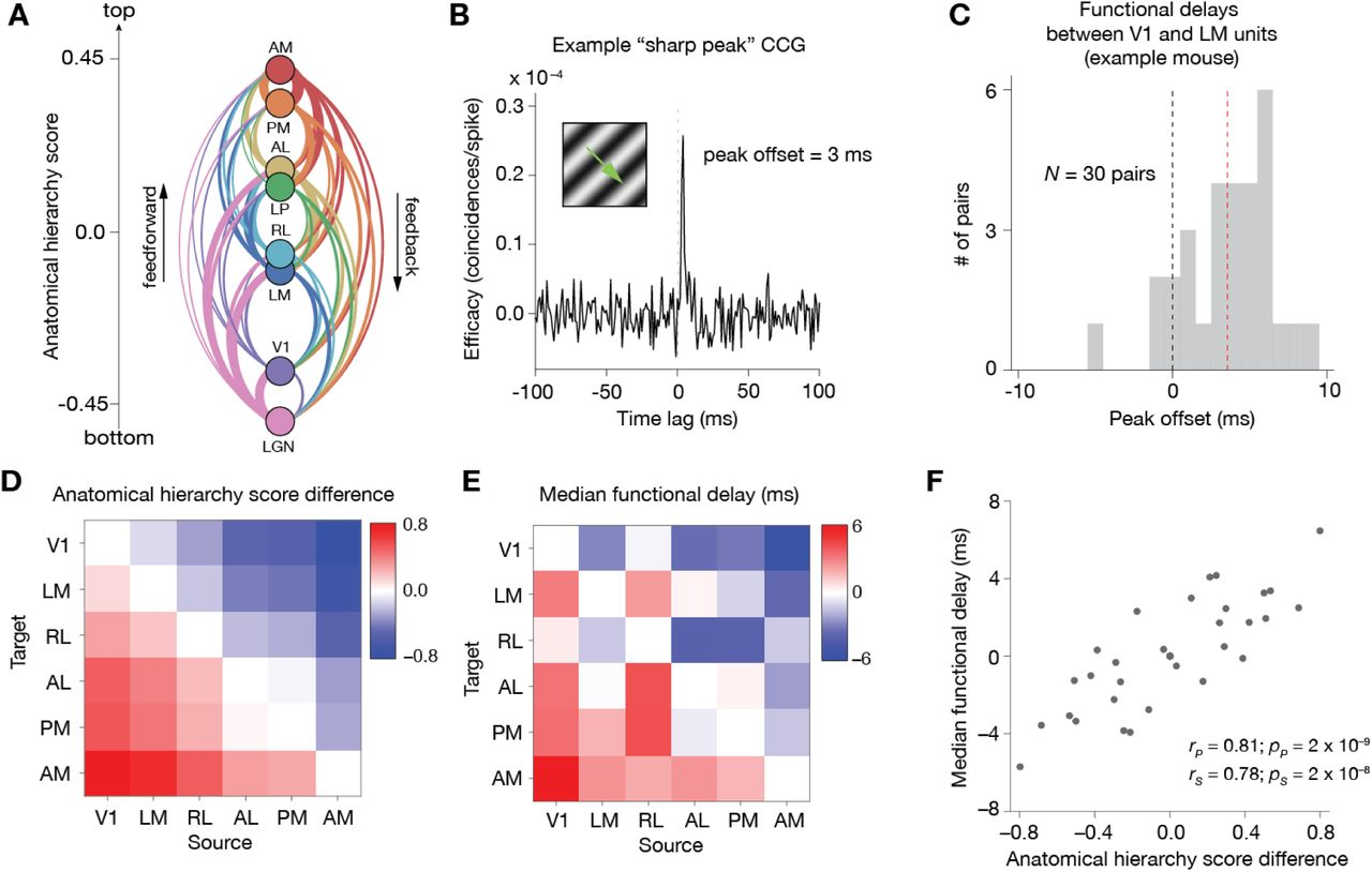 A survey of spiking activity reveals a functional hierarchy