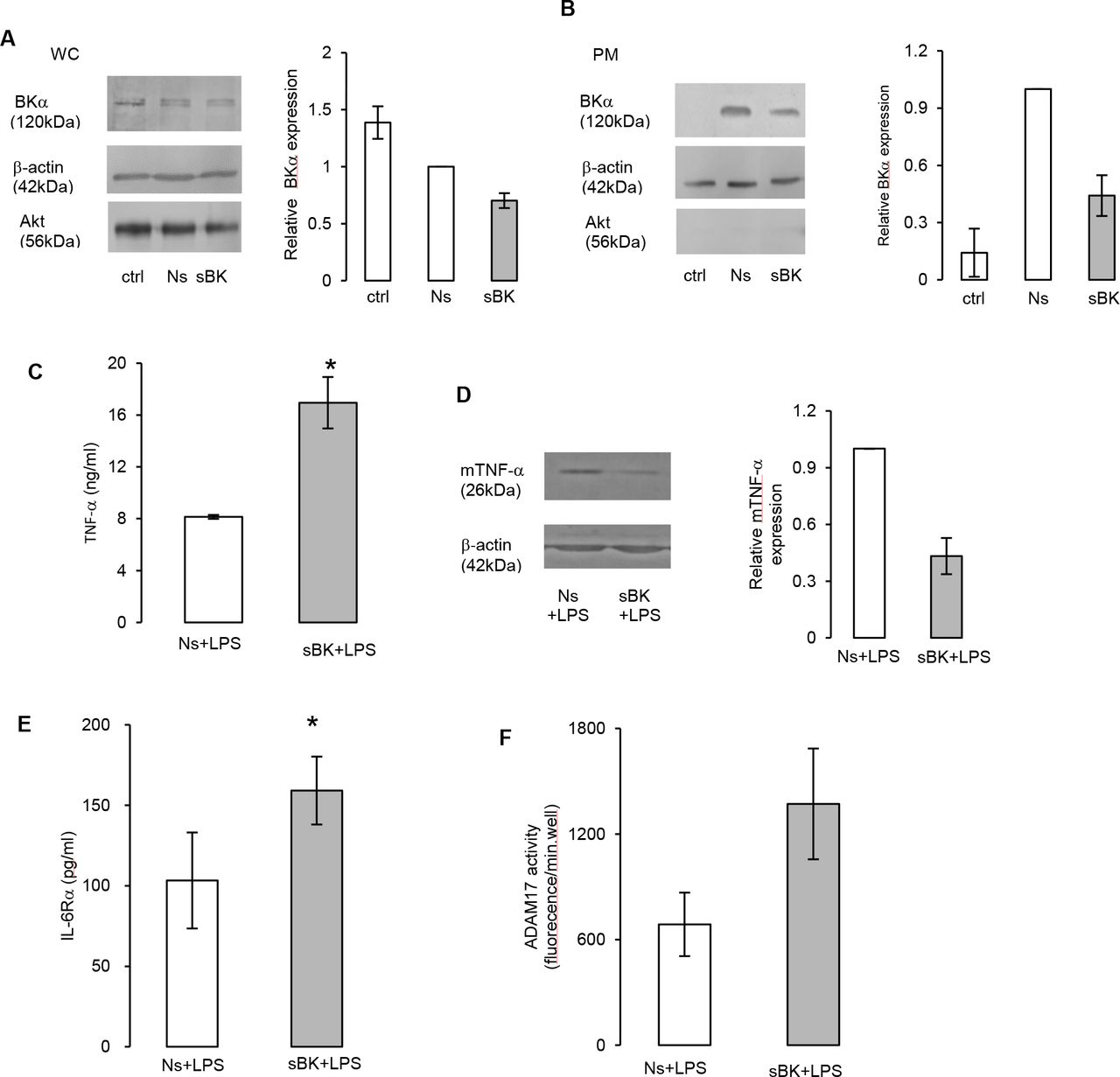 BK channel silencing increased <t>ADAM17</t> activity and enhanced secretion of TNF-α and IL-6Rα.. ( A ) ( B ) Western blot analysis of whole cell and plasma membrane proteins from siRNA treated macrophages. The cells were non-treated (ctrl), received non-silencing siRNA (Ns) or silencing siRNA for BKα genes (sBK) for 72 hours. BKα silencing effect in ( A ) whole cell (WC) and ( B ) plasma membrane (PM) lysate. Densitometry analysis of BKα expression in BKα silenced cells relative to non-silencing siRNA. Mean+/−SEM (n=3). ( C )-( F )After treatment with siRNAs, macrophages were activated with 150 ng/ml LPS for 4 hours. ( C ) TNF-α and ( E ) IL-6Rα release was analyzed by ELISA. Mean+/−SEM (n=4). ( D ) Western blot analysis of mTNF-α expression. Densitometry of mTNF-α expression in BKα silenced cells relative to non-silencing siRNA. Mean+/−SEM (n=3). ( F ) ADAM17 activity in BKα silenced (sBK) macrophages. Mean+/−SEM (n=3). *p