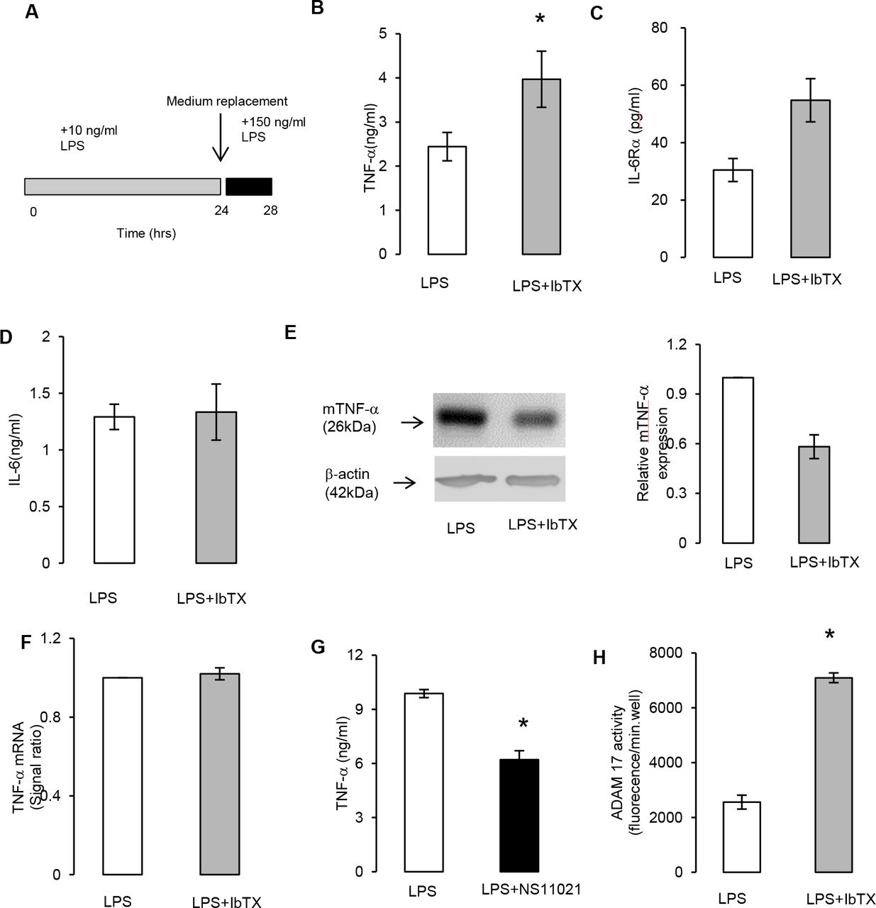 Pharmacological inhibition of BK channels increased ADAM17 activity and the release of TNF-α, and IL-6Rα. ( A ) Conditioned macrophages were prepared by stimulating cells with 10 ng/ml LPS for 24 hours. Subsequently the media was replaced and the conditioned cells were activated with 150 ng/ml LPS for 4 hours with/without 30 nM IbTX. ( B ) TNF-α, ( C ) IL-6Rα and ( D ) IL-6 release in were analyzed by ELISA. Mean+/−SEM (n=3). ( E ) Western blot analysis of mTNF-α expression and densitometry of mTNF-α expression relative to LPS only control group. ( F ) TNF-α mRNA was quantified by RT-qPCR. Mean+/−SEM (n=3). ( H ) ADAM17 activity. Mean+/−SEM (n=3). (G) Effect of 100 nM NS11021 on TNF-α release. *p
