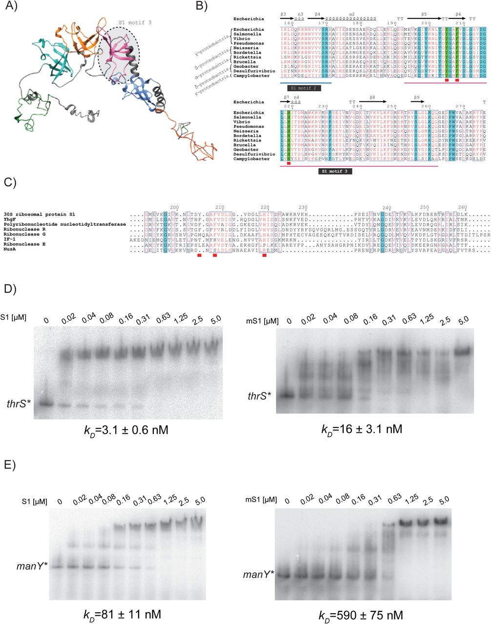 Translation Inhibition From A Distance The Small RNA SgrS