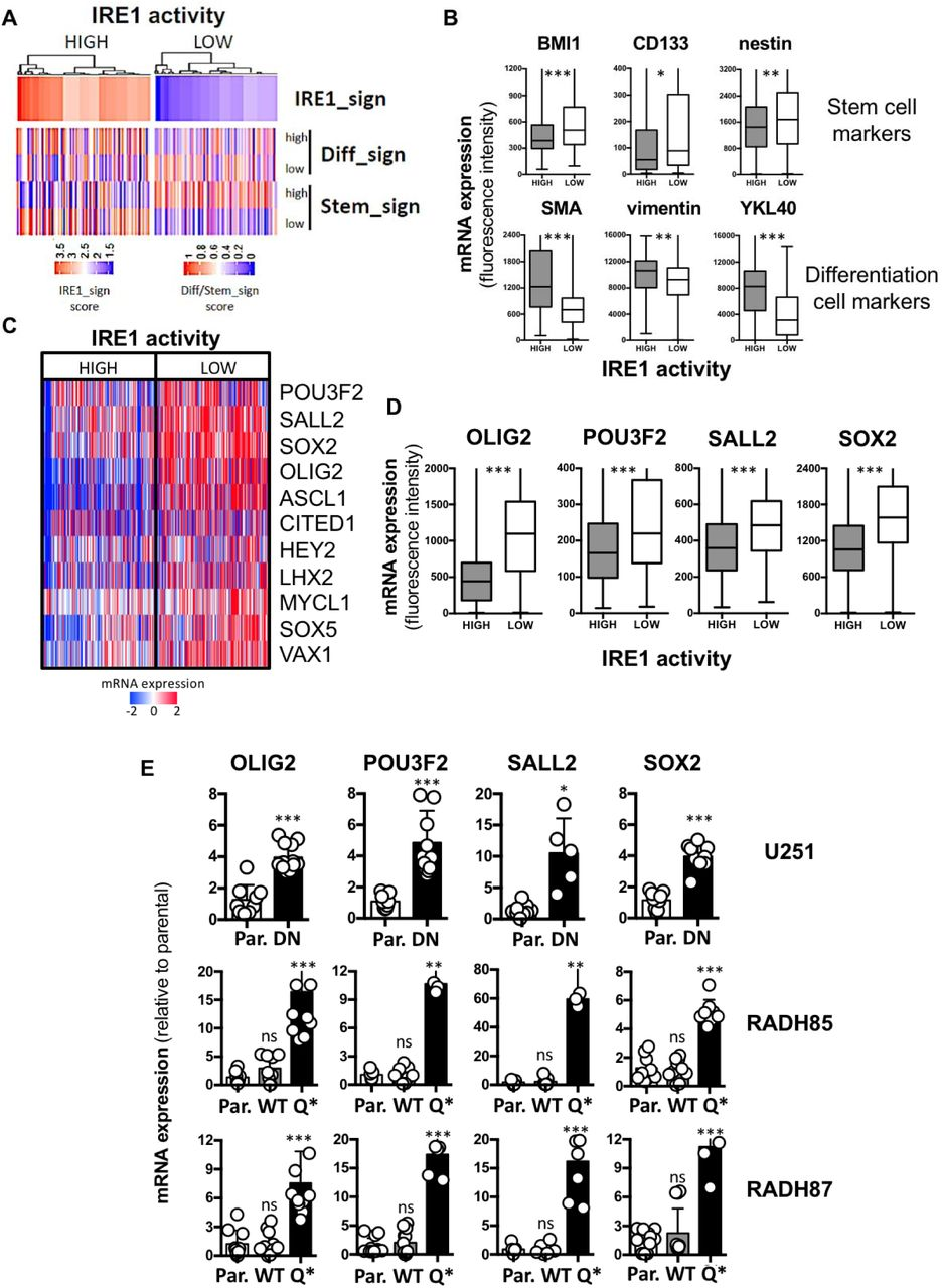 IRE1 activity is associated with cancer differentiated state in GBM specimens. A) Hierarchical clustering of GBM patients (TCGA cohort) based on high or low IRE1 activity confronted to differentiation and stem gene signatures derived from literature. B) mRNA expression of BMI1, CD133, nestin stem cell markers and SMA, vimentin, YKL40 differentiated cell markers based on microarray fluorescence intensity in high and low IRE1 activity tumors (TCGA cohort). C) Hierarchical clustering of GBM patients (TCGA cohort) based on high or low IRE1 activity confronted to a reprogramming TFs signature derived from literature. D) mRNA levels of reprogramming TFs OLIG2, POU3F2, SALL2, and SOX2 based on microarray fluorescence intensity in high and low IRE1 activity tumors (TCGA cohort). E) mRNA levels of reprogramming TFs in U251, RADH85 and RADH87 lines expressing WT, DN or Q* forms of IRE1 normalized to parental. (ns): not significant; (*): p