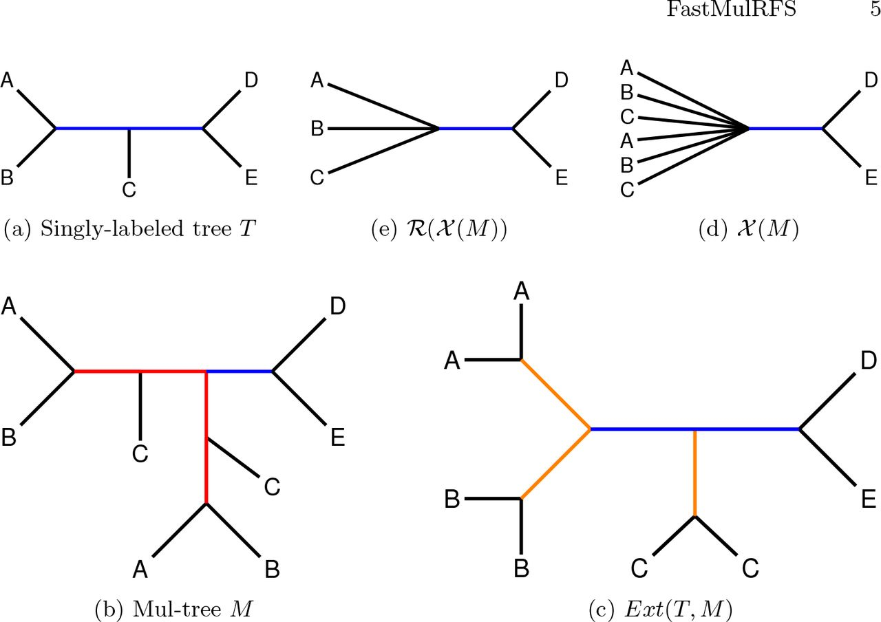FastMulRFS: Statistically consistent polynomial time species