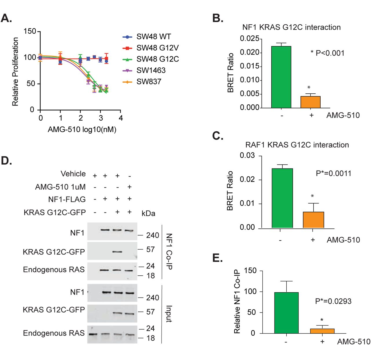 AMG-510 prevents KRAS-G12C from interacting with <t>NF1</t> and CRAF. ( A ) SW48 isogenic cell lines, SW837 and SW1463 were treated with increasing doses of AMG-510 for 48 hours and cell viability was measured with the MTT assay. Data points represent the mean of eight biological replicates. Results are representative of three separate experiments. ( B ) HEK293T cells were co-transfected with KRAS-GFP and <t>NF1-NanoLuc</t> with and without 500nM AMG-510 for 24 hours and signal is represented as a BRET ratio for both sample groups. Bars represent the mean of eight biological replicates. Results are representative of an individual experiment from three separate experiments. ( C ) HEK293T cells were co-transfected with KRAS-GFP and CRAF-NanoLuc with and without 500nM AMG-510 for 24 hours and signal is represented as a BRET ratio for both sample groups. Bars represent the mean of eight biological replicates. Results are representative of an individual experiment from three separate experiments. ( D ). HEK293T cells were transfected with either KRAS-G12C-GFP and NF1, NF1 alone, or mock transfection. Cells were then treated with either vehicle or 500 nM AMG-510 for 24 hours. Results are representative of an individual experiment from three separate experiments. ( E ) Mean KRAS G12C pull-down for the three independent NF1-coIP experiments. Statistical analysis was performed with unpaired t-test and P-values are indicated. Error bars in all panels represent standard deviation.
