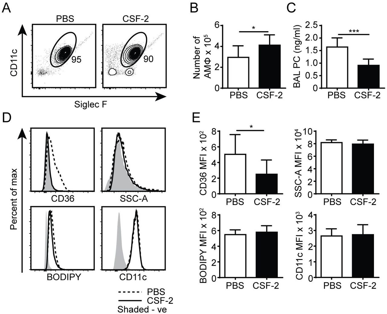 <t>CSF-2</t> induces AM proliferation and rescues aberrant pulmonary surfactant PC accumulation in CD44 -/- mice. (A) Representative flow cytometry plots showing the proportion of BAL AMs from CD44 -/- mice after 7 days of PBS or CSF-2 treatment. (B) Number of AMs in the BAL from CD44 -/- mice after PBS or CSF-2 treatment. (C) BAL PC concentration from CD44 -/- mice after PBS or CSF-2 treatment. (D) Representative flow cytometry histograms comparing the phenotype of AMs from CD44 -/- mice after 7 days of PBS or CSF-2 treatment. (E) Graphs comparing the MFI of SSC-A, BODIPY, CD36, and CD11c between AMs from CD44 -/- mice after 7 days of PBS or CSF-2 treatment. Data show an average of two experiments ± SD, each with three to five mice. Background MFI of autofluorescence from unlabeled CD44 +/+ and CD44 -/- cells were respectively subtracted in the flow cytometry analysis. Significance indicated as * p