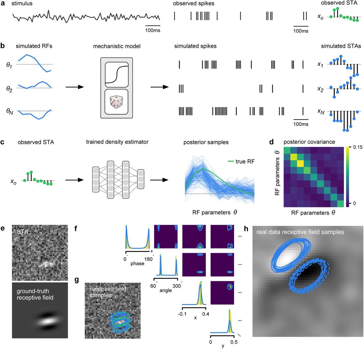 Training deep neural density estimators to identify