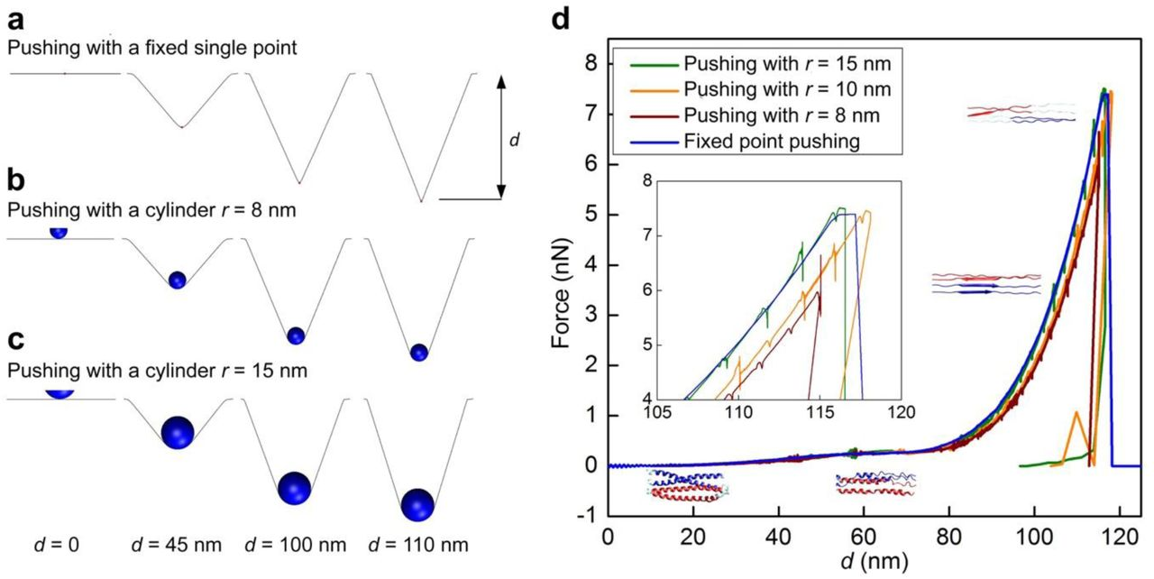 <t>Benzonase</t> nuclease treatment does not change lamin mechanics. ( a ) Step unit, ( b ) force, ( c ) stiffness and ( d ) deformation of lamin filaments in the meshwork of X. laevis nuclear envelopes were measured after nuclease treatment at a pushing speed of 1 µm s −1 . The values of the parameters were comparable to those obtained without nuclease treatment, at 1 µm s −1 , suggesting that chromatin, ribonucleoproteins or RNA were not present in the experimental system and did not influence the mechanical properties of lamins in our experiments. – Benzonase-free NEs, n = 204 for each parameter; + Benzonase-treated NEs, n = 172 for each parameter.