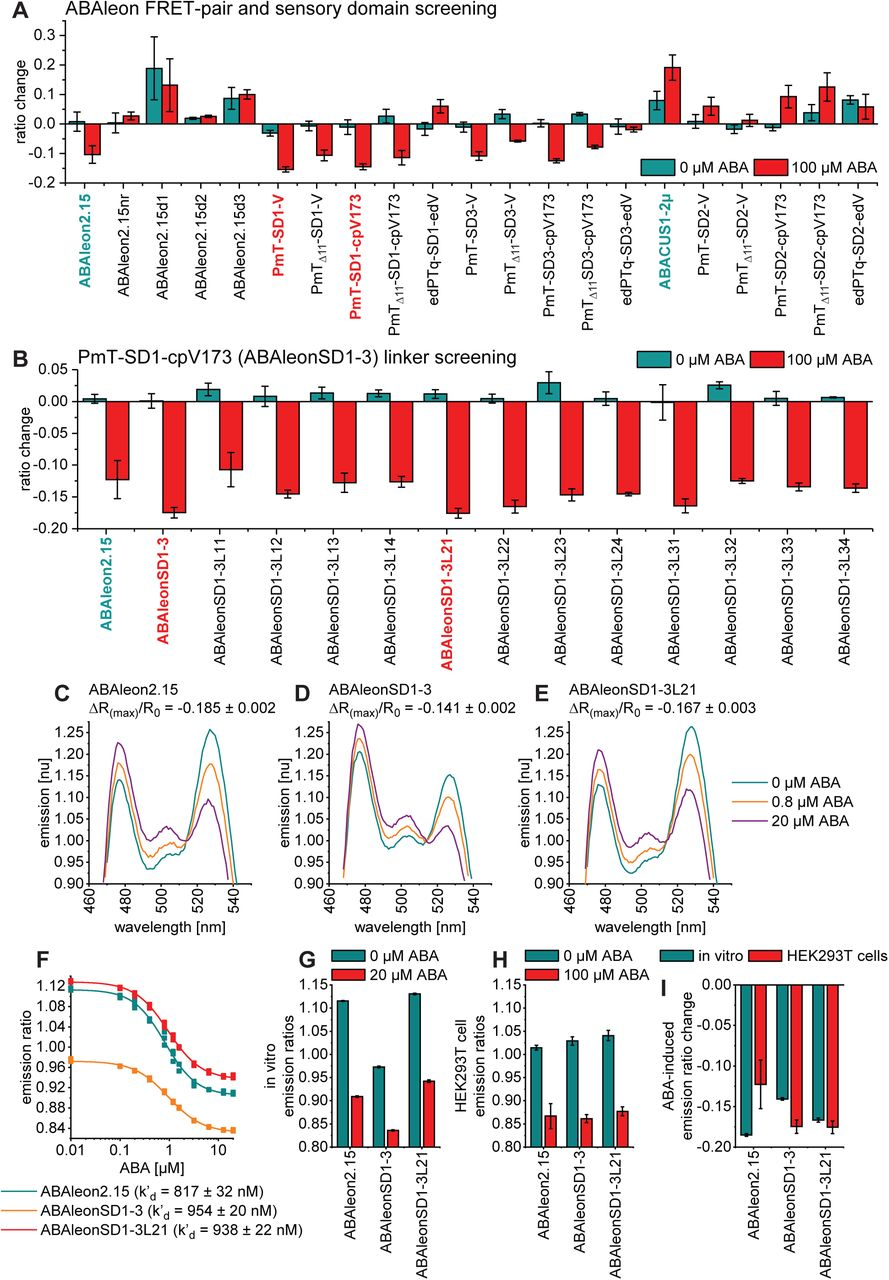 Development of ABAleonSD1-3L21. (A) FRET-pair and sensory domain, and (B) linker screening of ABA indicator variants after expression in HEK293T cells. Shown are emission ratio changes in response to 60 min treatments with 0 and 100 µM ABA. Reference indicators are shown in cyan and new candidates in red. Information on ABA indicator topologies is given in Supplemental Figure 1 . (C to E) Representative ABA-dependent normalized in vitro emission spectra of ABAleons with indicated maximum emission ratio change (ΔR (max) /R 0 ). (F) ABA-dependent in vitro emission ratios and apparent ABA affinities (k' d ) of ABAleons. (G and H) Comparison of ABA-dependent ABAleon emission ratios: (G) in vitro and (H) in HEK293T cells. (I) In vitro and HEK293T cell comparison of ABA-induced maximum emission ratio change. All data are shown as mean ± SD, n = 3.
