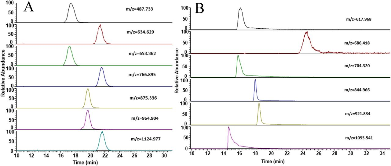 Separation of non-isomeric tryptic peptides. Selected ion chromatograms for various peptides are shown for ZIC-HILIC separation of tryptic digests of (A) BSA and (B) myoglobin.