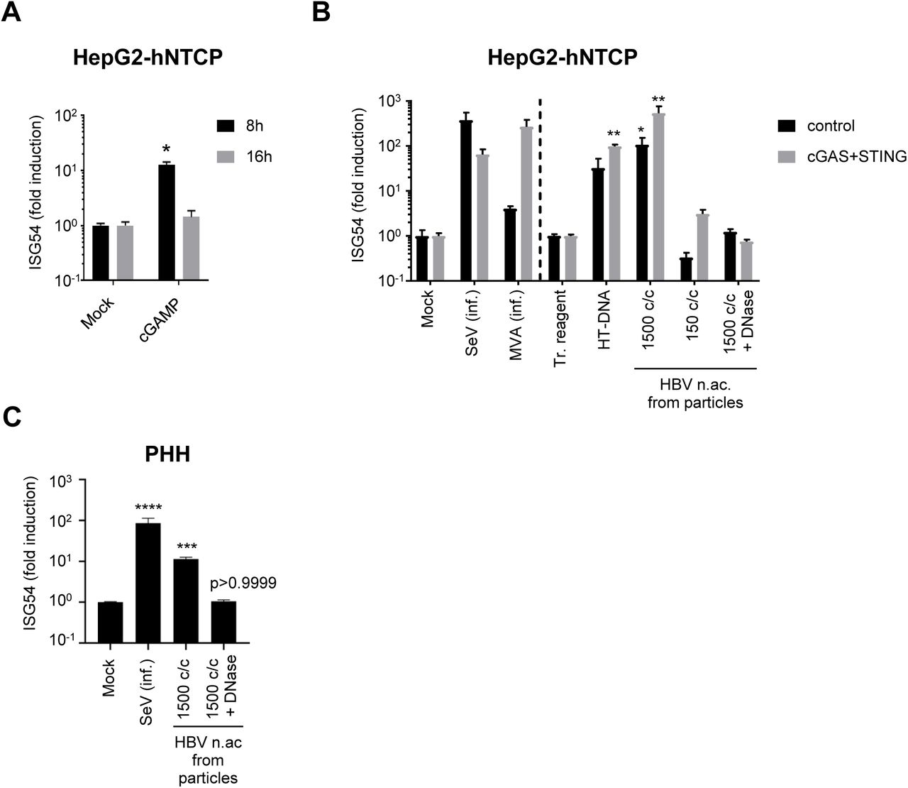 Hepatocytes respond to foreign DNA HepG2-hNTCP (A), HepG2-hNTCP-control or -cGAS/STING (B) or PHH (C) were stimulated with cGAMP (A), infected (inf.) with SeV or MVA-gfp, or transfected with HT-DNA or HBV nucleic acids (c/c: copies/cells) (B, C). ISG54 mRNA fold inductions to mock (A, B left part, C) or to transfection reagent-treated cells (tr. reagent) (B, right part) was determined by RT-qPCR. Average and SEM of 4 (A), 2 (B) independent experiments in triplicates or of 4 donors in duplicates (C). ****p