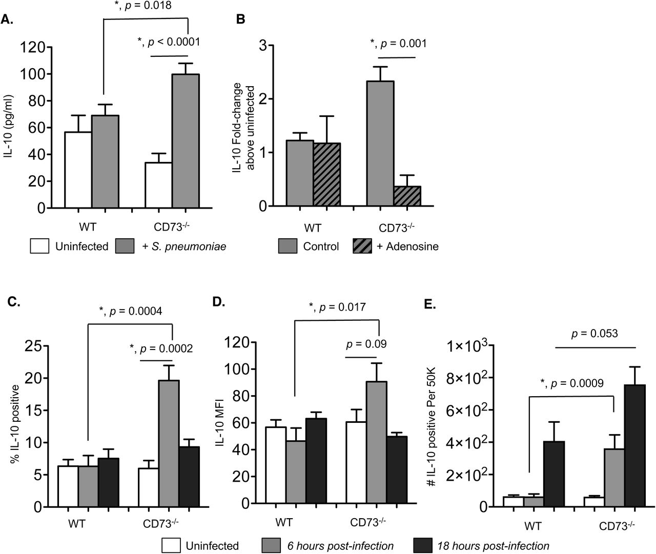 CD73 inhibits IL-10 production from PMNs following pneumococcal infection. (A) PMNs from the indicated mouse strains were incubated for 45 minutes at 37°C with S. pneumoniae pre-opsonized with homologous sera or mock treated with buffer and homologous sera (uninfected) in vitro . The supernatants were then collected and assayed for IL-10 production by ELISA. (B) PBS control or adenosine (100μM) were added to the PMNs 30 minutes prior to in vitro infection and the fold-change in IL-10 production was calculated by dividing the values of infected reactions by uninfected controls for each condition. Data were pooled from three separate experiments (n=3 mice) with each condition tested in triplicate per experiment. Asterisks indicate significant differences determined by Student's t-test. (C-E) Wild-type C57BL/6 or CD73 -/- mice were mock-infected or i.t challenged with 5 x 10 5 CFU of S. pneumoniae . Six (grey bars) and 18 hours (black bars) following challenge, (C) the percentage of IL-10 producing PMNs (Ly6G+), (D) the mean florescent intensities (MFI) of IL-10 in PMNs (Ly6G+) and (E) the number of IL-10 producing PMNs (Ly6G+) recruited into the lungs were determined by intracellular cytokine staining and flow cytometry (see Materials and Methods). Pooled data are from three separate experiments (n=6-9 mice per strain per time point). Significant differences determined by Student's t-test are indicated by asterisks.