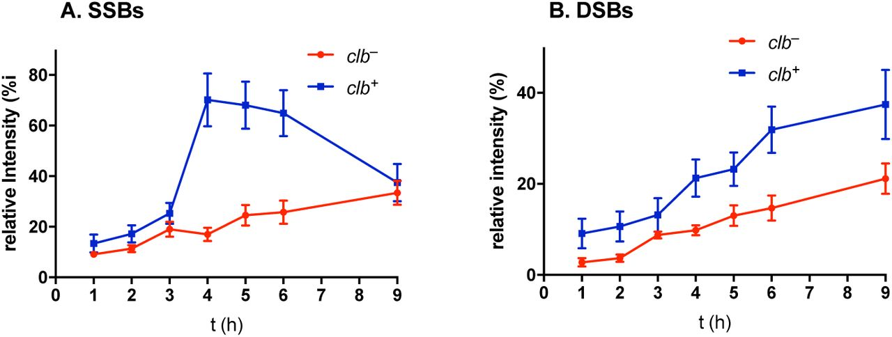 Formation of DNA SSBs and DSBs in circular pUC19 plasmid DNA treated with clb + or clb − E. coli . A. SSBs as a function of time. B. DSBs as a function of time. SSBs and DSBs are expressed as intensity of their respective bands relative to an internal control (untreated DNA). Three technical replicates (Fig. S2).