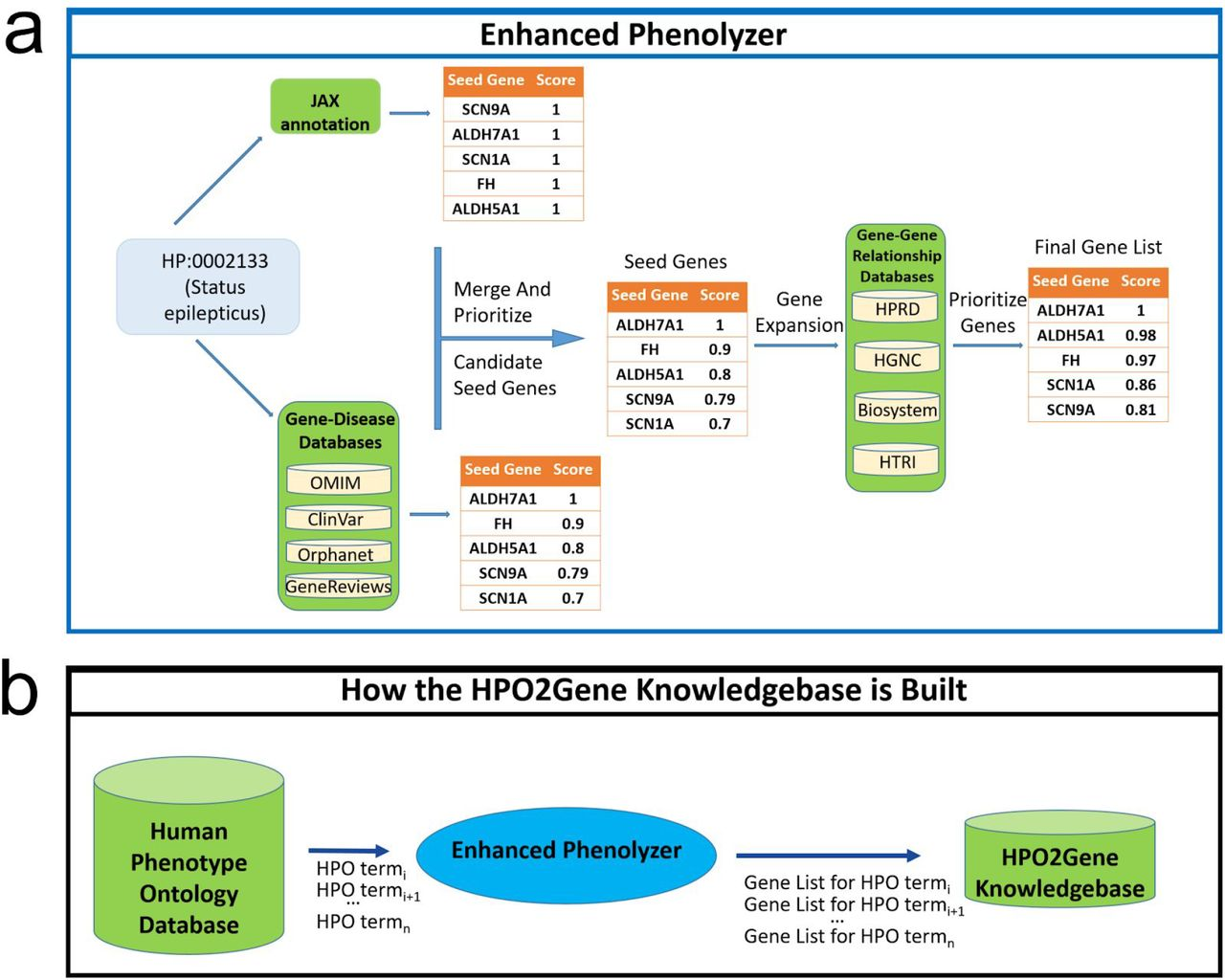 The construction of the HPO2Gene Knowledgebase. HPO terms are extracted one by one from the HPO database and passed into an enhanced version of Phenolyzer (dubbed Enhanced Phenolyzer) to create a database of ranked gene lists for all HPO terms. (a) The workflow of Enhanced Phenolyzer. (b) Construction of the HPO2Gene Knowledgebase.