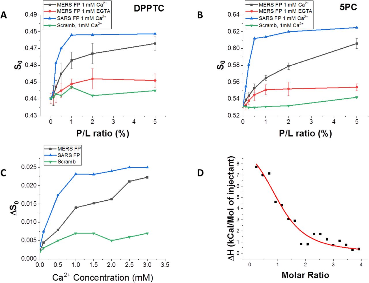 ESR and ITC analysis of the MERS-CoV FP. A-B. Plots of order parameters of DPPTC (A), and 5PC (B) versus peptide:lipid ratio (P/L ratio) of MERS FP or SARS FP in POPC/POPS/Chol=3/1/1 MLVs in buffer with 150 mM NaCl at 25°C. Black, MERS FP, 1 mM Ca 2+ and at pH 5; red, MERS FP calcium-less buffer with 1 mM EGTA and at pH 5; blue, SARS FP, 1 mM Ca 2+ at pH 5, and purple, scrambled peptide, 1 mM Ca 2+ and at pH 5. (C) Plot of difference of order parameters of DPPTC with and without 1% peptide binding (ΔS0) versus Ca 2+ concentration in POPC/POPS/Chol=3/1/1 MLVs in buffer with 150 mM NaCl at 25°C. Black, MERS FP; blue, SARS FP; and green, scrambled peptide. The experiments were typically repeated two to three times. The typical uncertainties found for S 0 ranges from 1-5 × 10 −3 , while the uncertainties from repeated experiments were 5-8 × 10 −3 or less than ±0.01. We show the standard deviation bars in Panel A and B. (D) ITC analysis of Ca 2+ binding to MERS-CoV FP. The peptides were titrated with CaCl 2 . The integrated data represent the enthalpy change per mole of injectant, ΔH, in units of kJ/mol as a function of the molar ratio. Data points and fitted data are overlaid. The fitting is based on the one-site model.