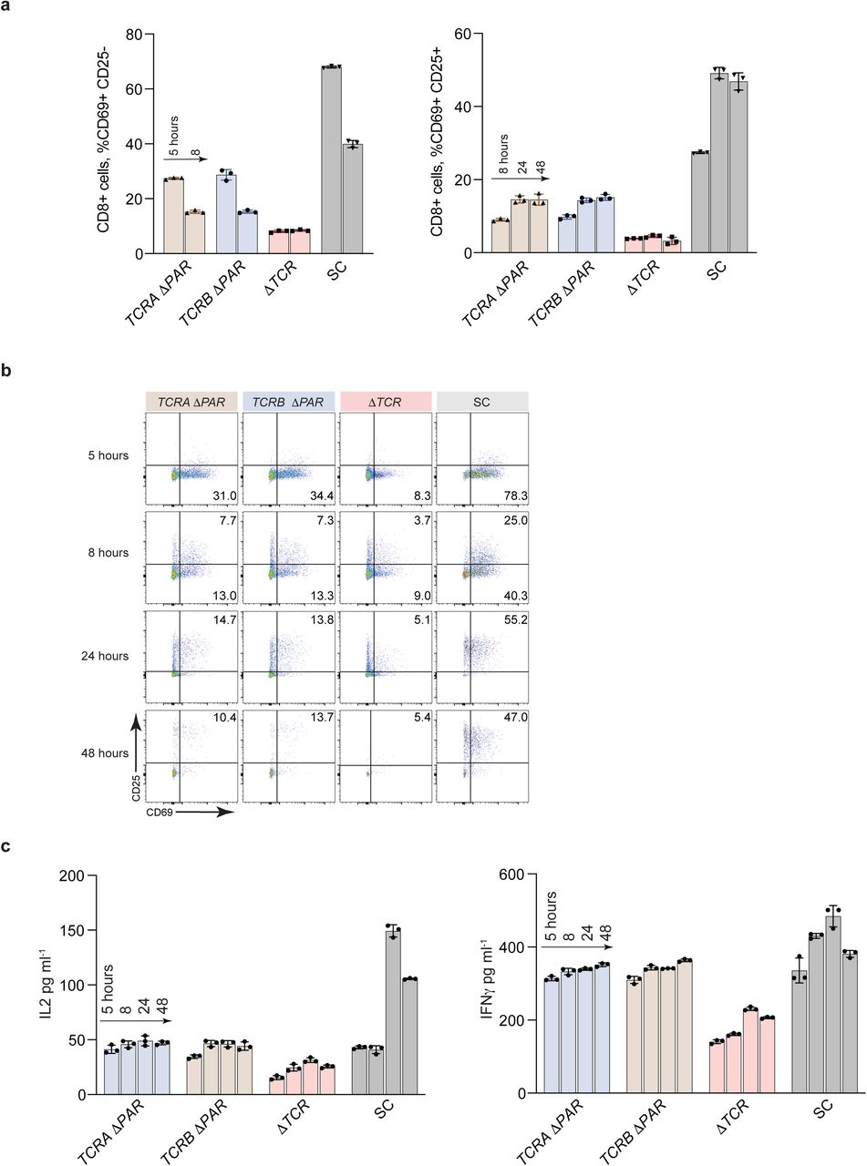 Phenotypic analysis of primary human T cells. a, Flow cytometric analysis measuring T cell activation markers CD69 (early activation marker) and CD25 (midactivation marker) in TCRA ΔPAR, TCRB ΔPAR, ΔTCR and SC CD8+ T cells, quantifying mean percent cells expressing CD69+ only (left) and CD69+ CD25+ (right) from ( n = 2 donors). b , Density plots showing cell populations expressing CD69+ only, CD69+ CD25+ or CD25+ only from one of the donors. Cells sorted as shown in Extended Data Fig. 9 . c , Quantification of secreted IL2 and IFNγ from cell lines TCRA ΔPAR, TCRB ΔPAR, ΔTCR and SC cell populations from ( n = 2 donors) at different time points after stimulation with anti-CD3/anti-CD28 antibodies, as determined by ELISA. For both figures a, and c, Values are mean ± standard deviation, ****P