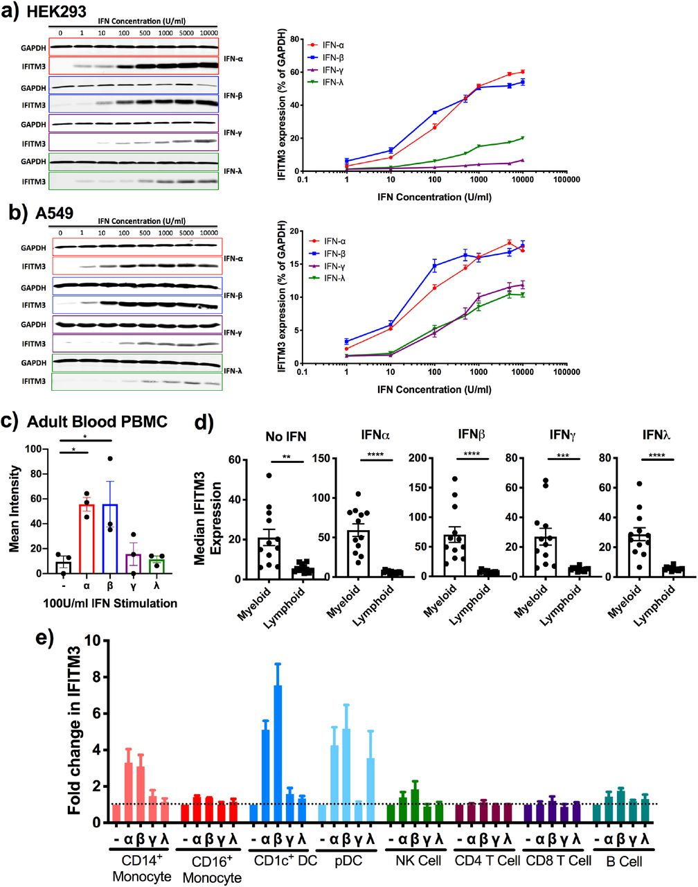 IFITM3 is preferentially induced by Type I IFN (a) Expression of IFITM3 in HEK293 cells following 24 hours IFN stimulation measured by Western blot and expressed as a percentage of GAPDH expression. (b) Expression of IFITM3 in A549 cells following 24 hours IFN stimulation measured by Western blot and expressed as a percentage of GAPDH expression. (c) Adult blood PBMC were cultured for 48 hours with IFN stimulation prior to measurement of IFITM3 expression by mass cytometry. (d) Expression of IFITM3 in myeloid and lymphoid cells following IFN stimulation. (e) IFITM3 expression is expressed as a fold change in expression compared to the basal level of expression in order to show induction. Data is expressed ±SEM and analysed by one-way ANOVA. *p