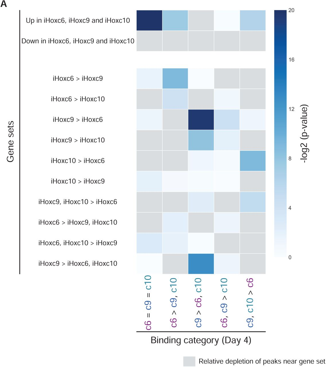 "Hoxc9 and <t>Hoxc13</t> genome-wide binding profiles differ from other posterior Hox TFs. (A) ChIP-seq heatmap showing binding comparisons of Hoxc9 and Hoxc13 in differentiating MNs, at Day 3. Sites bound by both indicated Hox TFs noted as ""c9 = c13"" sites. Preferentially bound sites by Hoxc9 or Hoxc13 noted as ""c9 > c13"" or ""c13 > c9"". (B-C) Principal Component Analysis (PCA) of the ChIP-seq datasets reveals similarities in the binding patterns of Hox TFs."