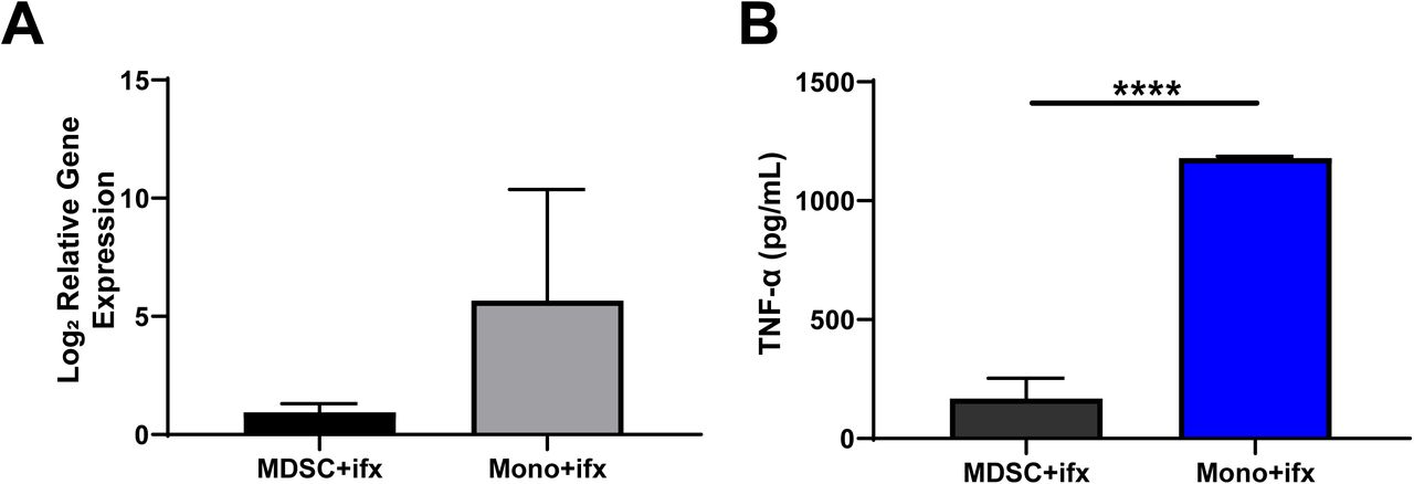 MDSCs and monocytes produce inflammatory cytokines during infection. CD66 + MDSCs and CD14 + monocytes isolated from human umbilical cord blood PBMCs were infected with an MOI 10 of E. coli O1:K1:H7 and incubated at 37°C for 6 hours. Supernatants were collected for inflammatory cytokine measurements. Cells were then lysed in TRI Reagent for RNA extraction, cDNA synthesis, and gene expression analysis of inflammatory cytokines. (A) Gene expression analysis of TNFα levels during infections. Infection levels were normalized relative to uninfected MDSC controls. Representative of 4 independent experiments, 10 replicates total per group. (B) Serum cytokine levels of TNFα measured via ELISA for infections of both MDSCs and monocytes. Cytokine levels were normalized based on standard curves for each protein. A representative of 2 independent experiments with 8 replicates total per group is shown. Statistical analysis was performed using an unpaired t-test for all panels. * p ≤ 0.05, **** p ≤ 0.0001.