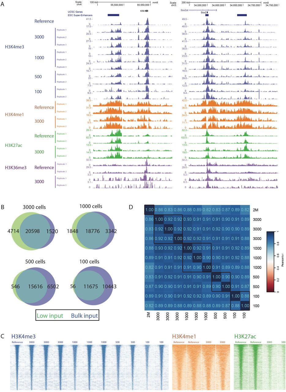 PnP-ChIP-seq using small cell quantities by the use of MNase shearing on 15,000 mESCs. (A) Gene-centered genome browser view for PnP-ChIP-Seq of H3K4me3, H3K4me1, H3K27ac and H3K36me3. (B) Overlap between de novo peak calls of PnP-ChIP-seq and bulk ChIP-Seq. (C) Heatmap of merged peak set for various starting amount of sonicated chromatin for PnP-ChIP-Seq of H3K4me3, H3K4me1, H3K27ac and H3K36me3. (D) Cross-correlations of PnP-ChIP-Seq using tag counts of merged peak set.
