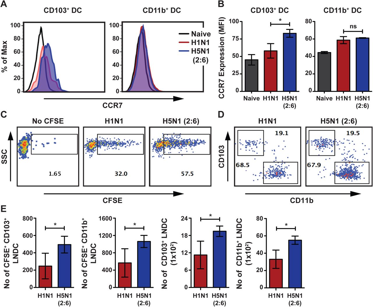 H5N1 (2:6) infection induces higher upregulation of CCR7 and migration of lung DC. C57BL/6 mice (n=3-4 per group) were intranasally infected with 100 PFU of H1N1 or H5N1 (2:6) and lung DC activation and migration was analyzed by flow cytometry. (A) Representative histogram comparing the expression of CCR7 on CD103+ DC or CD11b+ DC subsets on day 2 pi. (B) Quantification for panel A. CCR7 expression levels are shown as MFI. (C-D) C57BL/6 mice were infected with 100 PFU of H5N1 (2:6) or H1N1 and instilled with 50μl of 8mM CFSE at day 2pi. After 16h, the number of CFSE+ migratory DC present in the MLN was analyzed by flow cytometry. (C) Representative FACS plots showing CFSE+ population in the MLN. (D) Relative levels of CFSE positive CD103+ and CD11b+ DC in the MLN. (E) Bar charts showing the number of CFSE+ DC subsets in the MLN. (F) Bar chart showing total numbers of DC subsets in the MLN. The values are expressed as mean ± SD. * denotes statistical significance of