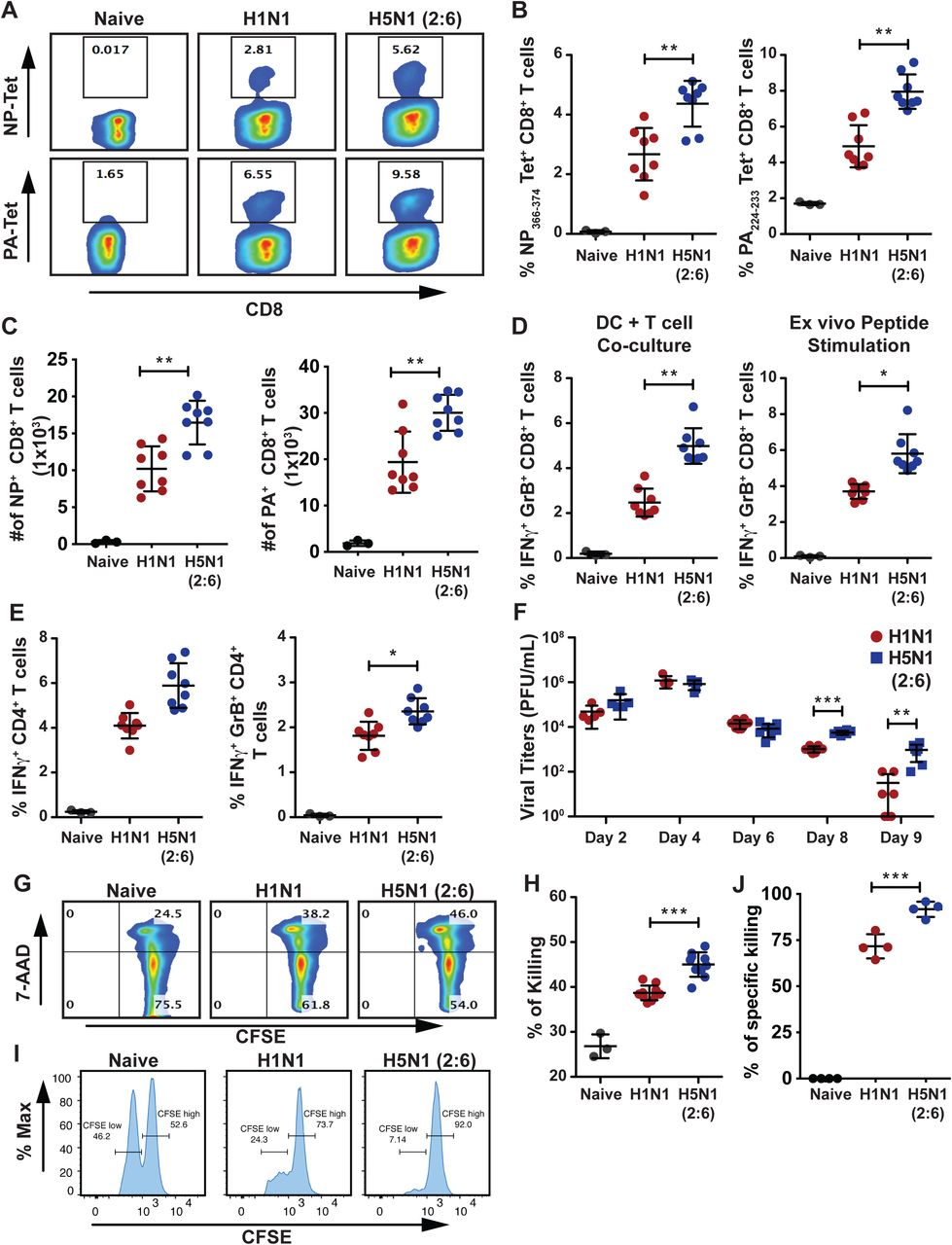 Mice infected with H5N1 (2:6) mount robust T cell responses but show delayed viral clearance. (A-E) C57BL/6 mice (n=3-4/group) were infected with 100 PFU of H1N1 or H5N1 (2:6) and on day 8 pi, T cells from the lungs were isolated and evaluated in various assays. (A-C) Comparative analysis of lung CD8+ T cells from H5N1 (2:6) or H1N1 infected mice by NP or PA tetramer staining. (A) Representative FACS plots for NP or PA tetramer staining. (B) Relative frequency of tetramer positive CD8+ T cells. (C) Absolute numbers of virus specific CD8+ T cells. (D-E) Comparative analysis of cytokine production in T cells isolated from the lungs of H5N1 (2:6) or H1N1 infected mice. T cells were co-cultured with BMDC either infected with X31 (H3N2) or pulsed with NP peptide, and the frequencies of IFNγ and GrB producing T cells were analyzed by flow cytometry. (D) Relative frequency of cytokine producing CD8+ T cells. (E) Relative frequency of cytokine producing CD4+ T cells stimulated with NP peptide. (F) Evaluation of viral loads in the lungs of infected mice. C57BL/6 mice were infected with 100 PFU of H1N1 or H5N1 (2:6) and at various times pi, viral loads in the lungs were measured by standard plaque assay. (G-H) Ex vivo analysis of cytotoxic T cell functions. CFSE labeled splenocytes pulsed with NP peptide were co-cultured with lung CD8+ T cells for 8hrs, followed by staining with 7-AAD. Ex vivo cytotoxic effects of CD8+ T cells were evaluated by analyzing 7-AAD positive splenocytes. (G) Representative FACS plots for 7-AAD positive cells and (H) relative level of killing by T cells shown as percentage of 7-AAD positive cells. (I-J) In vivo analysis of cytotoxic T cell functions. (I) Representative FACS plots for in vivo killing of adoptively transferred NP pulsed splenocytes in H1N1 or H5N1 (2:6) virus infected mice and (J) relative level of kiiling by T cells. The values are expressed as mean ± SD. *, **, *** denotes significance of