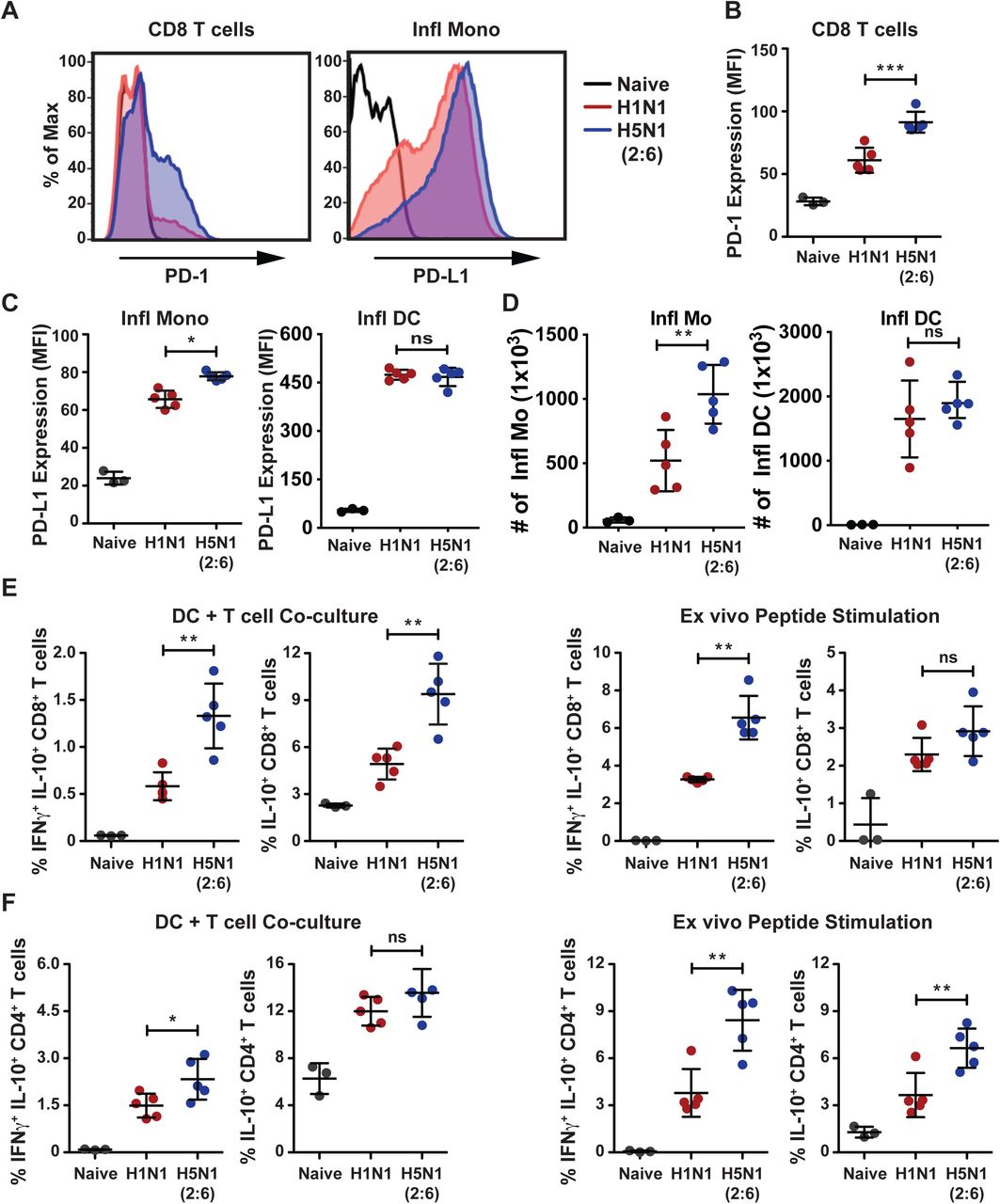 H5N1 (2:6) infection induces higher expression of PD-1 and IL-10 in cytotoxic T cells. C57BL/6 mice were infected with H5N1 (2:6) or H1N1 virus and on day 8pi, expression of PD-1 and production of IL-10 in CD8+ T cells were measured ex vivo upon co-culture with infected DC or peptide pulsed DC by flow cytometry. PD-L1 expression on inflammatory monocytes was also measured by flow cytometry. (A) Representative histograms showing expression of PD-1 on CD8+ T cells and PD-L1 on Ly6C + inflammatory monocytes. (B) quantification for PD-1 expression in CD8 T cells as MFI. (C) Quantification of PD-L1 expression in inflammatory monocytes and inflammatory DCs. (D) Absolute numbers of inflammatory monocytes and inflammatory DCs. (E) Quantification of IL-10 producing CD8+ T cell frequencies in X-31 infected DC-T cell co-culture (upper panel) and NP peptide pulsed DC-T cell co-culture (lower panel). (E) Cytokine production in CD4+ T cells. Frequencies of IFNγ and IL-10 or IL-10 alone producing CD4+ T cells in X-31 infected DC-T cell co-culture (left panels) and NP peptide pulsed DC-T cell co-culture (right panels). The values are expressed as mean ± SD. *, **, *** denotes significance of