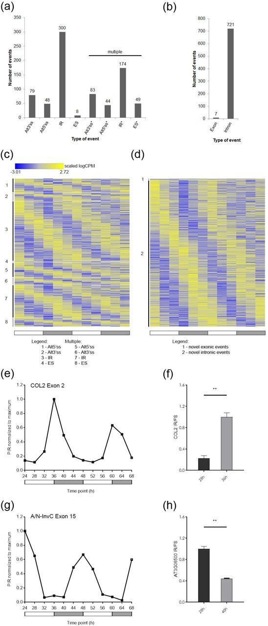 Global Transcriptome Analysis Reveals Circadian Control Of
