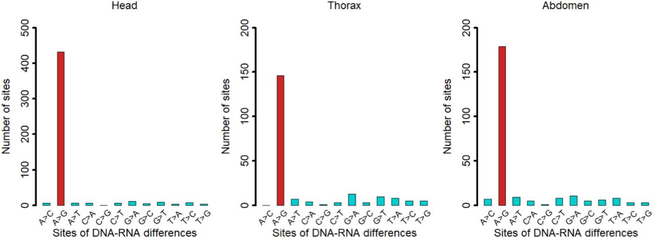 Numbers of different types of <t>DNA-RNA</t> differences detected in heads, thoraxes, or abdomens of honeybees.
