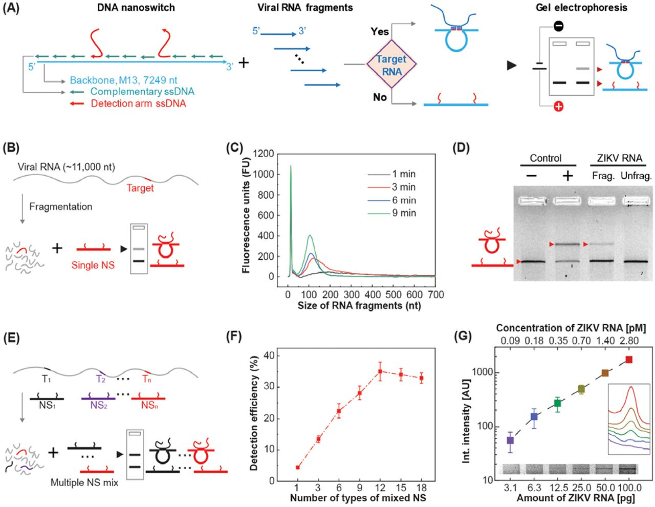 Detection of viral RNA using DNA nanoswitches.