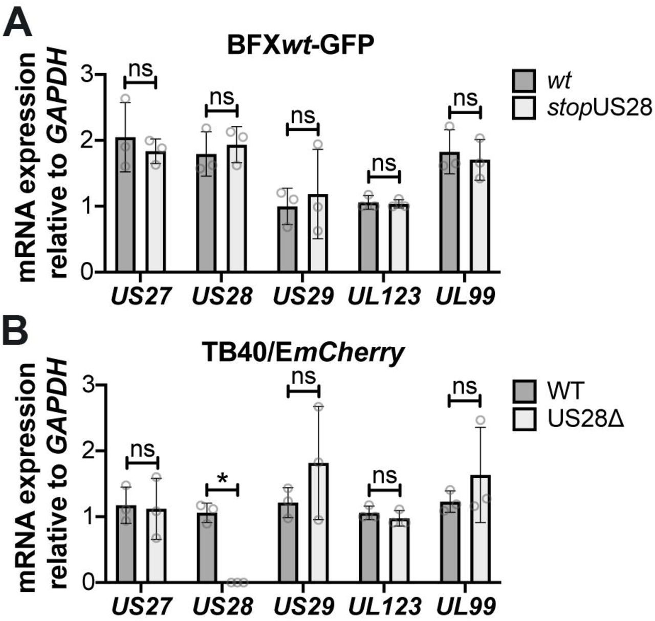 Abrogating pUS28 expression does not impact US27 or US29 transcription. NuFF-1 fibroblasts were infected (moi = 0.5) with (A) BFX wt -based or (B) TB40/E mCherry -based viruses. Total RNA was harvested 96 hpi and US27 , US28 , US29 , UL123 , and UL99 mRNA levels were quantified by RTqPCR. Viral gene expression is plotted relative to cellular GAPDH . Each data point (circles) is the mean of three technical replicates (e.g. one biological replicate). Error bars indicate standard deviation of three biological replicates, and statistical significance was calculated using two-way ANOVA analyses followed by Tukey's post-hoc analyses. * p