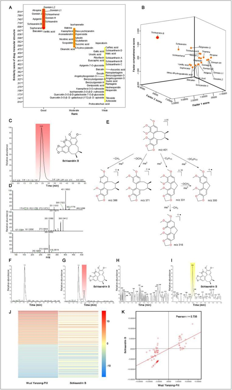 Schisandrin B is identified as a potent agent for treatment of male fertility Notes: The studies (A-B) were performed by simulation and statistical analyses in accordance with measurements on the methanol extract of Wuzi Yanzong-Pill (WP) by <t>UPLC-ESI-LTQ-Orbitrap-MS.</t> A. Similarity scores of drug molecular structures for 106 major compounds extracted from WP. The study was performed for evaluating the druggability for each component by software of Medchem Studio v3.0 (Simulations Plus, Inc., Lancaster, CA). The result reveals that schisandrin B (SB) along with 21 other components has been listed in the higher score in evaluating the druggability. B. Factor comprehensive score of SB among 22 compounds which have higher similarity scores of drug molecular structures. The study was performed for further screening the drug candidate with the Factor Analysis with software of SPSS v 20 (IBM, Armonk, NY). Factor 1, the similarity scores of drug molecular structures; Factor 2, the relative abundances of a compound among 22 compounds extracted from WP. The result indicates that SB has the highest druggability among them in evaluating the factor comprehensive score. The studies (C-I) were analyzed by UPLC-ESI-LTQ-Orbitrap-MS: C. Typical total ion chromatogram (TIC) of pure SB; D. Triple fragment spectra of pure SB; E. Fragmentation pathways of SB; F. Typical TIC chromatogram of blank mouse plasma; G. Typical TIC chromatogram of mouse plasma after oral administration of SB (20mg/kg) at 3 h; H. Typical TIC chromatogram of blank mouse testis; I. Typical TIC chromatograms of mouse testis after oral administration of SB (20mg/kg) at 3 h. The studies (J-K) were performed by gene sequence profiling on the testicular samples of oligoasthenospermia mice (OM) after oral administration of SB (20mg/kg/d for 2 weeks; n = 3) or WP (1.56g/kg/d for 2 weeks; n = 3): J. Gene heatmaps for the most significant up- and downregulated genes (each 50 genes) in the testicular samples from OM af