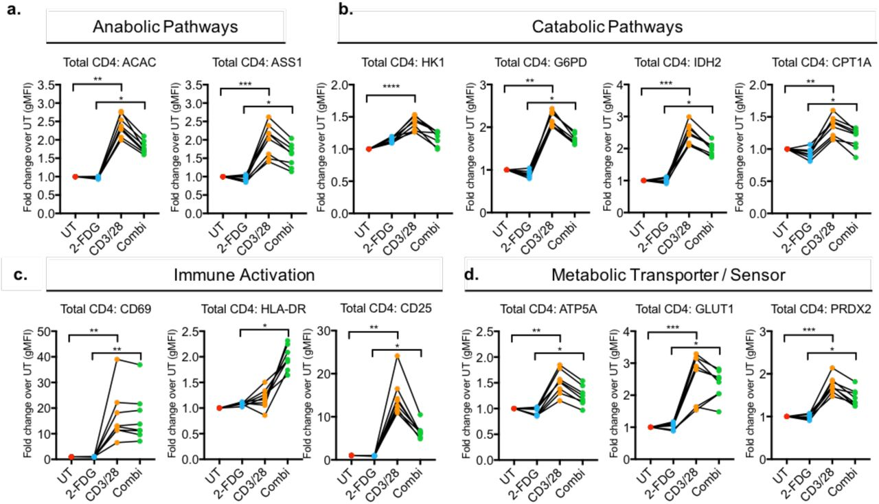 The activation and metabolic states of CD4+ T cells are altered by glycolytic inhibition. Fold change of metabolic protein and activation markers (gMFI) was measured in CD4 + T cells with no treatment (UT), 2-FDG, CD3/28, and combination of 2-FDG with CD3/28 (Combi). Metabolic proteins are grouped by (a) anabolic pathways, including fatty acid synthesis and arginine metabolism, and (b) catabolic pathways, including glycolysis, oxidative PPP, TCA cycle and fatty acid oxidation. (c) Activation markers and (d) the ATP synthase protein critical for OXPHOS, glucose transporter and the antioxidant protein were measured. Each dot represents one donor sample, total n=8 donors from 3 independent experiments.