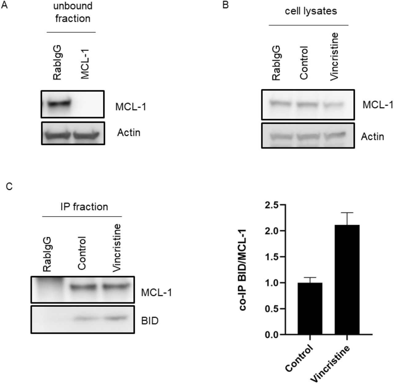Vincristine induces resistance in RMS cells through BID inhibition by MCL-1. (A) Western blot results of the unbound fraction after MCL-1 <t>immunoprecipitation.</t> High efficiency of MCL-1 immunoprecipitation compared to Rabbit IgG control antibody. (B) Western blot results showing MCL-1 levels in CW9019 cell lysates (incubated with vincristine or DMSO for 36 hours) before performing the immunoprecipitation. (C) Left panel: Western blot results of the co-immunoprecipitation between MCL-1 and BID. Right panel: Quantification of the optical density of each protein and represented as binding ratio between BID and MCL-1. Results showed a significant increase in BID and MCL-1 binding after vincristine treatment, which is restored to control levels after the addition of S63845. Values indicate mean values ± SEM from at least three independent experiments, * p