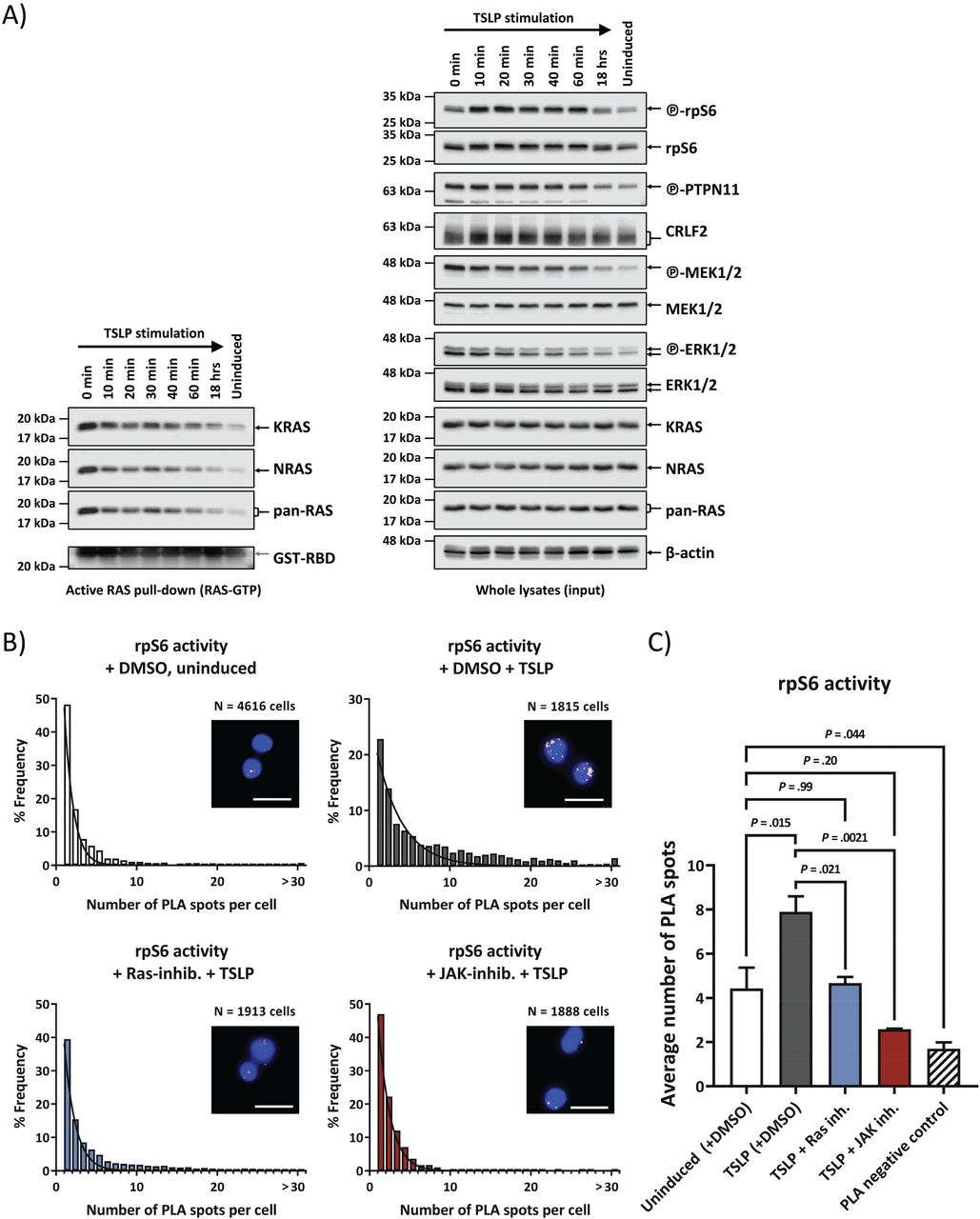 Ras Activation Via Crlf2 Signaling Is A Widespread Mechanism In Down Syndrome Acute Lymphoblastic Leukemia Regardless Of Ras Mutations Biorxiv