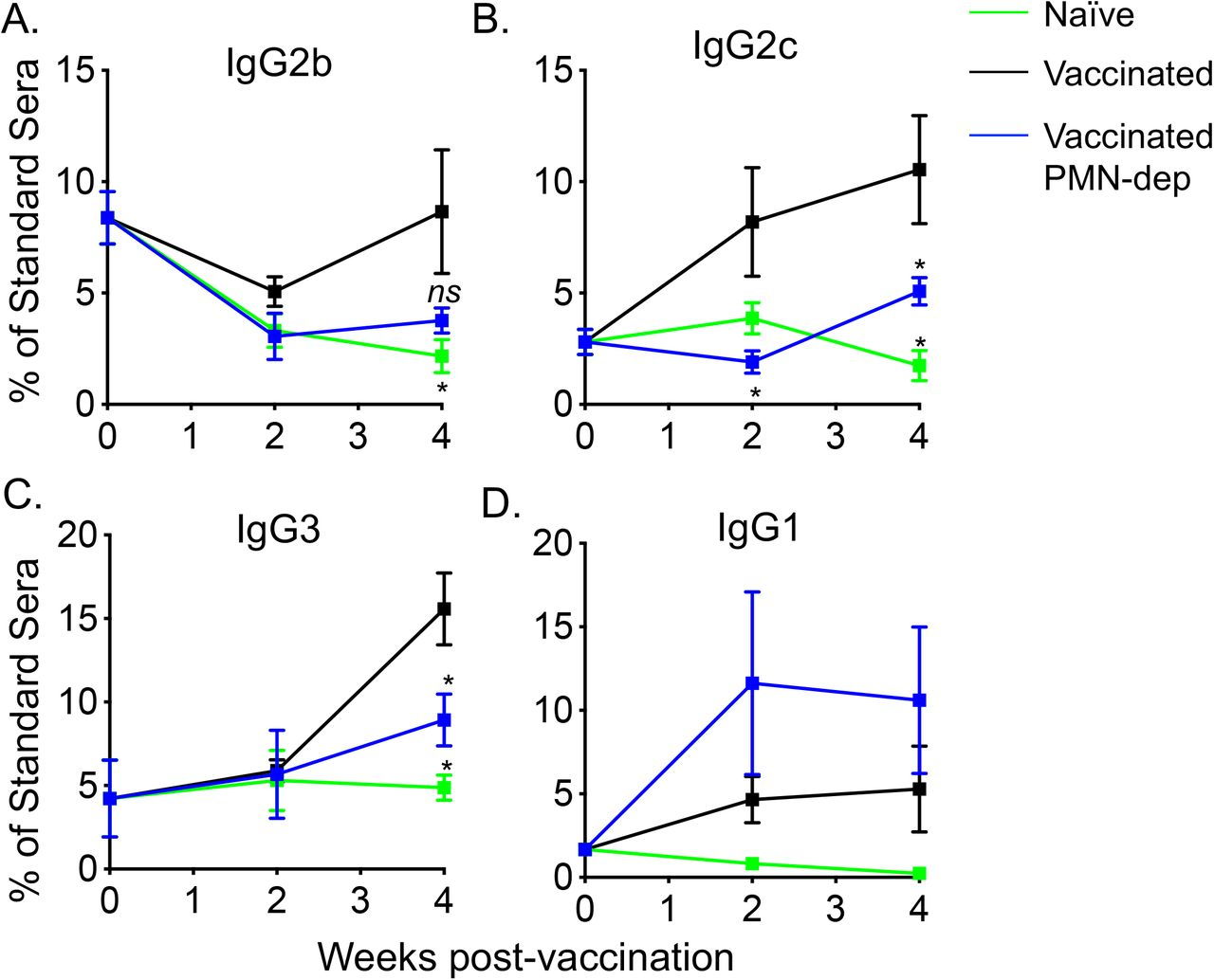 PMNs contribute to IgG2 and IgG3 production following PCV immunization. Sera were collected from naïve (green lines), Prevnar-13 immunized (black lines) and PMN depleted Prevnar-13 immunized mice (blue lines) following the timeline presented in Fig 1A . (A-D) The levels of the indicated antibodies against purified polysaccharide serotype 4 were then measured in the sera by ELISA. Antibody units were calculated based on a hyperimmune standard. p values were determined by student t-test. Asterisks ( p