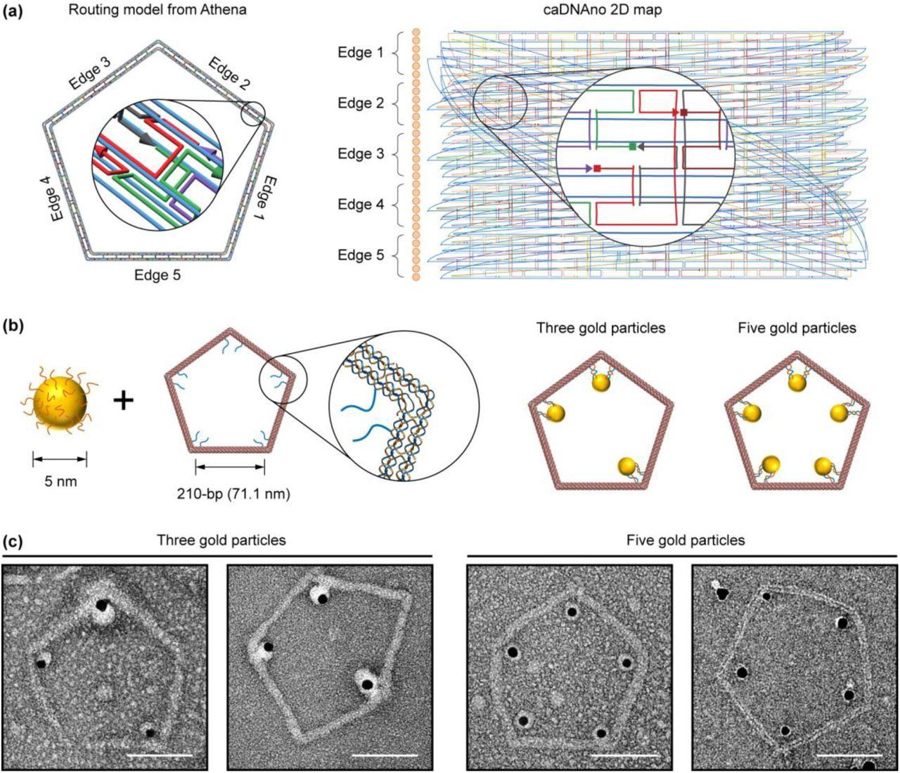 Origami DNA | Howtosmile | 1099x1280