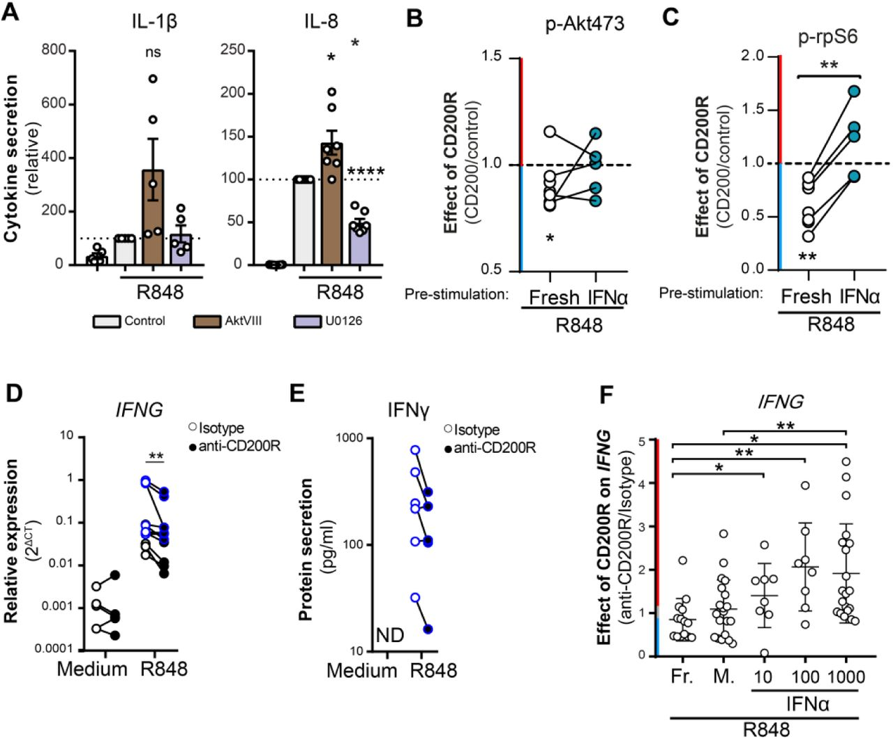 Exposure to type I IFN reverses CD200R function in PBMC ( A ) Cytokine secretion by moDC stimulated with R848 for 6h in presence of control, Akt-inhibitor AktVIII or Mek-inhibitor U0126. IL-1β: n=5, IL-8: n=8. Significance was determined by one-sample t test. ( B, C ) Phosphorylation of p-Akt473 and p-rpS6 in HC moDC. Fresh replated (n=8, 3 samples without IFN-counterpart) or IFNα-stimulated (16h, n=5, paired with fresh samples) moDCs were seeded on plates coated with control (recombinant human CD200R1, rhCD200R1) or recombinant human CD200 (rhCD200). After 2h pre-incubation, the moDC were stimulated with 1µg/ml R848 for 30 minutes. Phosphorylation was assessed by flow cytometry. Depicted is the ratio of phosphorylation in CD200-stimulated conditions over control stimulated conditions. Significance between the effect of CD200R on fresh and IFNα stimulated cells was determined by t test. Significance of the effect of CD200R in medium or IFNα stimulated cells was determined by one-sample t test. ( D, E ) mRNA (n=11) and protein (n=6) data on R848-induced IFNG or IFNγ production in PBMC. Donors with blue lines are matched between mRNA and protein data. Significance was determined by Wilcoxon test. ND = not detectable. ( F ) The ratio of R848 induced IFNG mRNA production of PBMC stimulated with anti-CD200R over PBMC stimulated with isotype. IFNG mRNA production was measured in healthy control PBMC that were used fresh after isolation (Fr., n=14), or have been cultured for 16h in medium (Med, n=20), 10 (n=8), 100 (n=8) or 1000 (n=20) U/ml of IFNα prior to ligation of CD200R with an agonistic antibody and stimulation of TLR7/8 with R848 for 4h. Significance was determined by a paired t test with Welch correction.