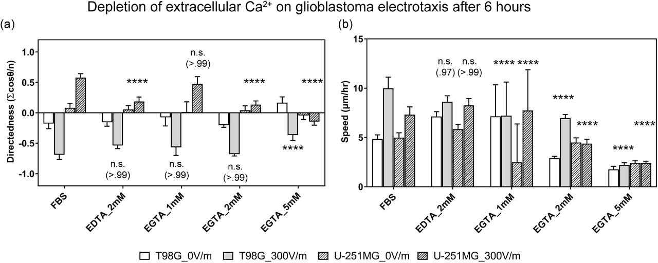 The electrotaxis of T98G U-251MG glioblastoma cells in dependence of extracellular calcium by varying concentration of calcium chelators, EDTA and EGTA. (a) The electrotaxis directedness; (b) The electrotaxis speed; † indicate the electrotaxis groups tested against those without EF stimulation; All groups are statistically compared to controls in cell culture media with 10% FBS; n.s. indicates not significant; **** indicate P