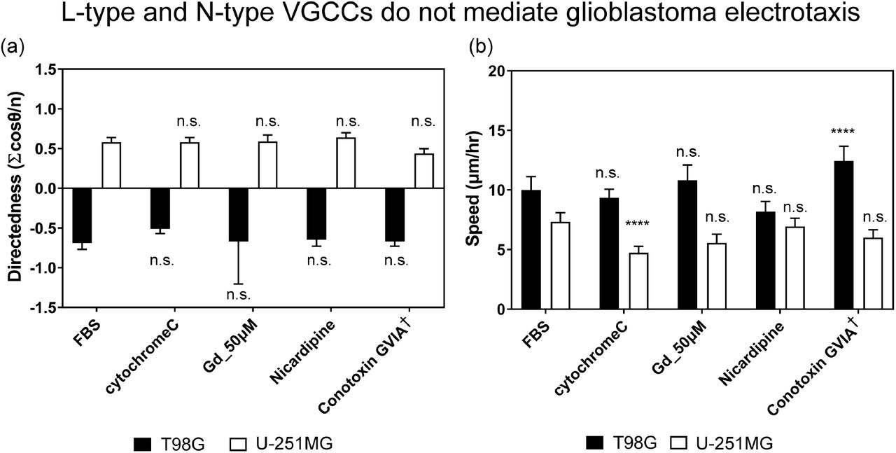 The electrotaxis of T98G U-251MG glioblastoma cells under 300 V m −1 dcEF after 6 hours with pharmacological inhibition on L-type (50 μ M Gadolinium [Gd] and Nicardipine) and N-type VGCCs (Conotoxin GVIA). a) The electrotactic directedness of the two cells. (b) The electrotactic speed of the two cells. ‡ indicate the electrotaxis group tested against those with cytochrome C which prevents adsorption of short peptides to experimental apparatus; All other groups are statistically compared to their respective controls in cell culture media with 10% FBS; n.s. indicates not significant; **** indicate P