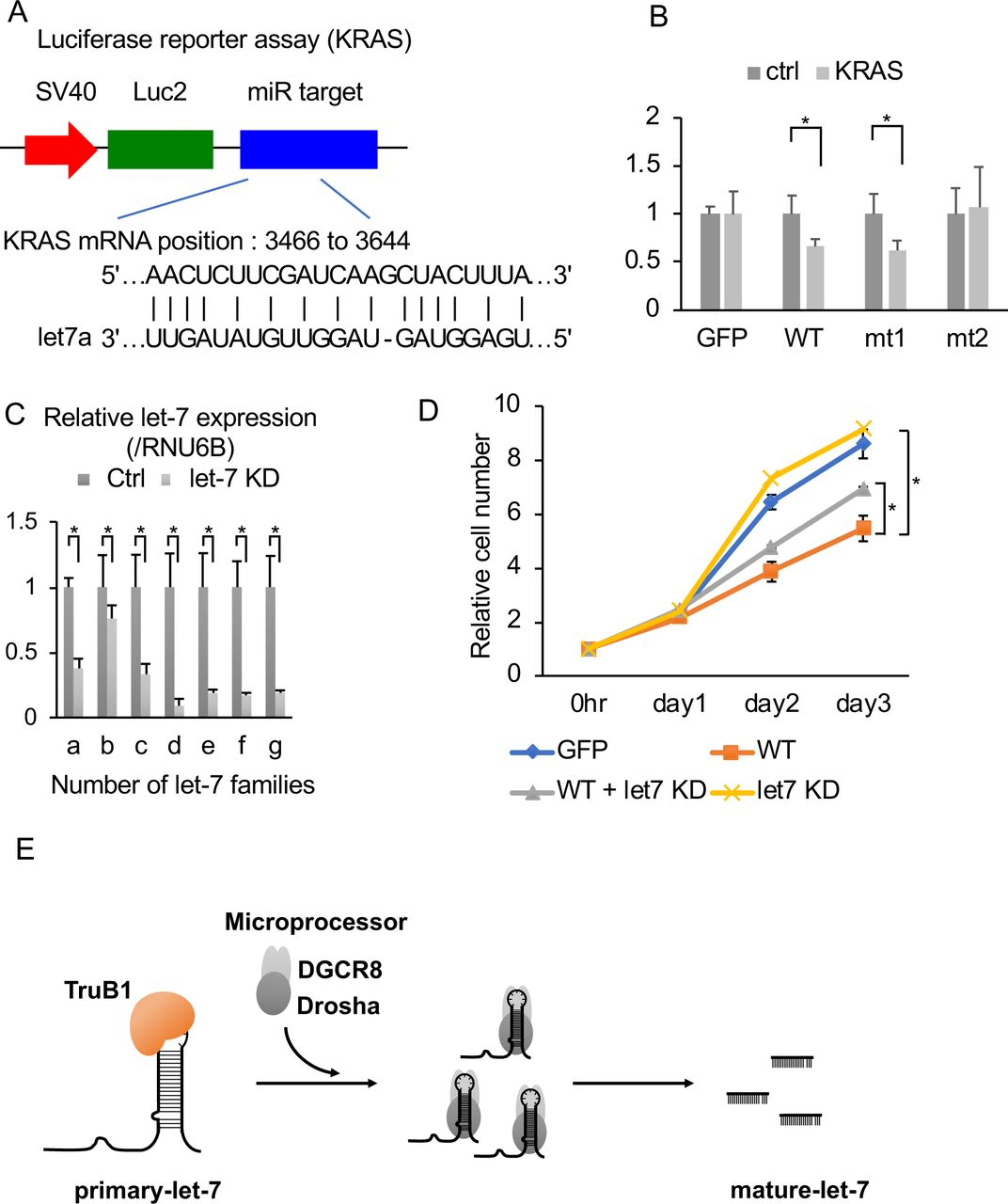 TruB1 suppresses cell growth by regulating let-7 (A). Design of luciferase reporter vector comprising the let-7 target region of KRAS mRNA (KRAS reporter). (B). Relative luciferase activity of KRAS reporter or Ctrl (empty) reporter in HEK293FT cells infected with lentiviruses expressing tetracycline-inducible TruB1, mt1, mt2, or GFP 5 days after doxycycline treatment. (C). Relative expression of let-7 families determined by qRT-PCR in HEK-293FT cells with KD of let-7 family members or ctrl (using 2'-O-methylated antisense inhibitor). (D). Real-time glo assay for HEK293FT cells infected with lentiviruses expressing tetracycline-inducible TruB1 or GFP, 5 days after doxycycline treatment, with or without KD of let-7 family members. (E). Schematic model for TruB1-dependent induction of let-7. All experiments were performed in triplicate. Error bars show SD; n=3.