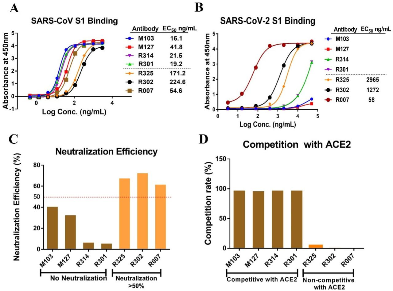 Cross-reactivity and neutralization efficiency of SARS nAbs against SARS-CoV-2. A. Binding of SARS nAbs to SARS-CoV S1 protein were tested by ELISA. Recombinant S1 protein of SARS-CoV were coated on plates, serial diluted nAbs were added for binding to recombinant S1 protein. B. Binding of SARS nAbs to SARS-CoV-2 S1 protein were tested by ELSIA. Recombinant S1 protein of SARS-CoV-2 were coated on plates, serial diluted nAbs were added for binding to recombinant S1 protein. C. Neutralization of SARS-CoV nAbs against SARS-CoV-2 PSV. D. Antibody competition with SARS-CoV RBD binding to ACE2. Recombinant SARS-CoV RBD protein was coated on plates, nAbs and recombinant ACE2 were then added for RBD binding competition measurements.