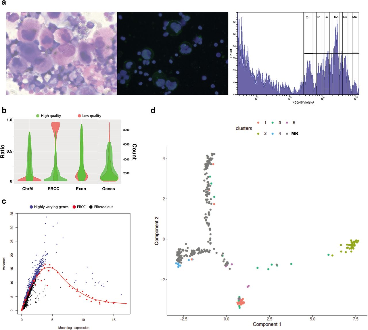 Single cell and low input <t>RNA</t> sequencing of bone marrow MKs a. Human bone marrow MK phenotype. Left panel: Cytocentrifugation of enriched MK population stained with Roberts stain, 40x objective; Middle panel: Immunofluorescent staining of enriched megakaryocyte population with DAPI DNA stain (blue) and CD41 surface stain (green); Right panel: Fluorescence activated cell sorting for primary megakaryocytes from whole human bone marrow. Ploidy plot shown detecting levels of Hoechst 33342 staining showing typical ploidy distribution for human bone marrow MKs (cells shown are CD41a+, CD42a+); b. Single MK cell filtering. Performed using a 5-round training scheme of random forest models 37 trained cDNA from 20 cell MK pools that were isolated using an identical sorting and sequencing protocol. High and low quality cells shown by mitochondrial mapping (ChrM), <t>ERCC</t> ratio (ERCC), exonic ratio (Exon), number of called genes (Genes). Green denotes high quality, red denotes low quality. Out of 1106 cells, 282 were taken forward for further analysis based on high quality; c. Gene filtering. Variance of normalized log-expression values for each gene in the HSC dataset, plotted against the mean log-expression. Variance estimates for ERCC spike-in transcripts and curve fit are highlighted in red. Blue dots represent highly varying genes (n=2000); d. Ordering differentiation trajectories between HSC cell clusters using Monocle 2 with the addition of the MK 20-100 cell pools. HSC clusters and MKs are differentiated by color.