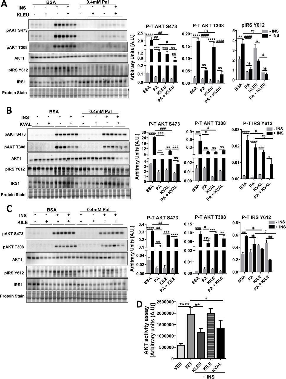 BCKAs impair insulin signaling in <t>C2C12</t> cells. (a-c) Differentiated C2C12 cells were pre-incubated with either 2% BSA or 2% BSA conjugated with 0.4mM palmitate for 16 hr followed by either a) 5mM ketoleucine, b) ketovaline or c) ketoisoleucine treatment for 30 mins. Myotubes were subjected to 100 nM insulin for 15 mins in presence or absence of individual BCKAs. Immunoblot and densitometric analysis of total and phosphorylated AKT Ser 473 and Thr 309, total and phosphorylated IRS Tyr 612. Statistical analysis was performed using a two-way ANOVA followed by a Tukey's multiple comparison test; *p