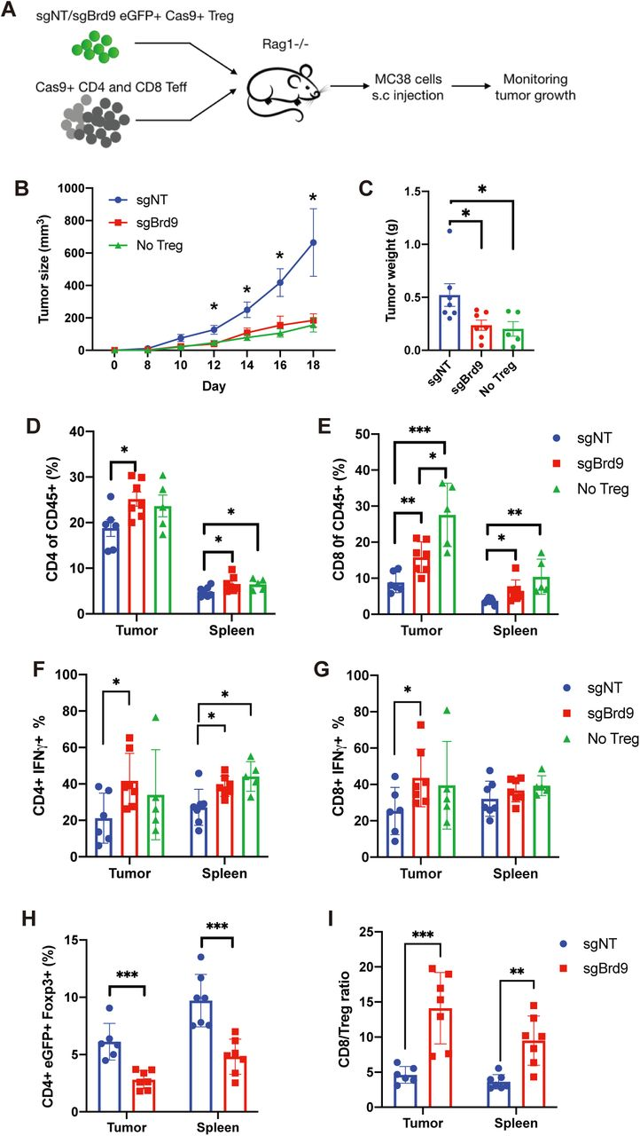 Targeting BRD9 in Treg improves anti-tumor immunity. A, Experiment procedure to measure function of sgNT or sgBrd9 knockout Treg cells relative to no Tregs in MC38 tumor model. B , Tumor growth curve. C , Tumor weight at end point. D,E , Bar graph of total CD4 T cells ( D ) and CD8 T cells ( E ) percentage in CD45+ immune cell population. F,G , Bar graph of IFN-γ+ cell percentage in CD4 T cells ( F ) and in CD8 T cells ( G ). H , Bar graph of CD4+eGFP+Foxp3+ donor cells in CD4+ T cells . I, Ratio of CD8/Treg. (n=5-7 per group. Data represent mean ± s.e.m.) Statistical analyses were performed using unpaired two-tailed Student's t test (ns: p≥0.05, *p