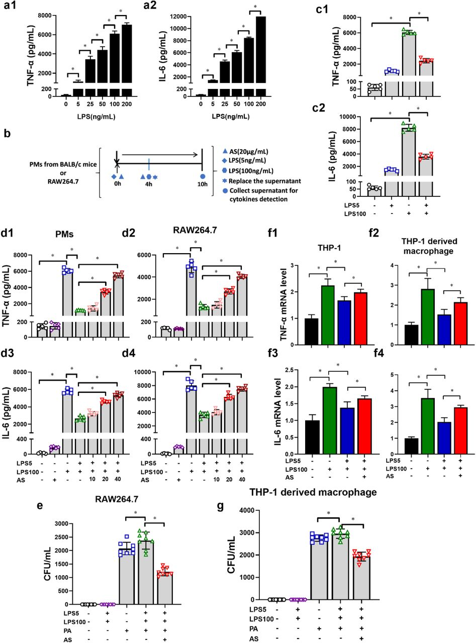 AS increases pro-inflammatory cytokines release and bacterial clearance within LPS-tolerance macrophages (n = 4). (a) LPS increased the release of TNF-α (a1) and IL-6 (a2) from PMs in a dose-dependent manner. (b) Schematic diagram to establish LPS-tolerance macrophages model. (c) The level of TNF-α (c1) and IL-6 (c2) in LPS-tolerance PMs (n = 5). (d) Effect of AS (10, 20 and 40 μg/mL) treatment on the level of TNF-α (d1, 2) and IL-6 (d3, 4) in LPS-tolerance PMs and RAW264.7 cells (n = 5). (e) Effect of AS treatment (20 μg/mL) on the bacterial load in LPS-tolerance RAW264.7 cells (n = 8). (f) Effect of AS (20 μg/mL) treatment on the level of TNF-α (a1, 3) and IL-6 (a2, 4) in LPS-tolerance THP-1 monocytes and THP-1 derived macrophages (n = 5). (g) Effect of AS treatment (20 μg/mL) on the bacterial load in LPS tolerance THP-1 derived macrophages (n = 8). (* P