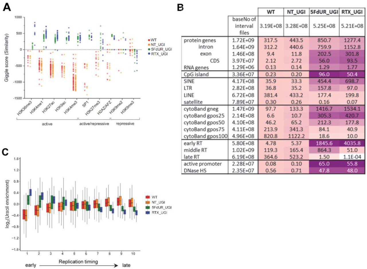 Characterization of U-DNA enrichment patterns. (A) Top hs from GIGGLE search on HCT116 specific dataset. GIGGLE search was performed with interval (bed) files of uracil enriched regions on a set of HCT116 related ChIP-seq and DIP-seq experiment data (for details see the Supplementary Material). Factors corresponding to the top 10 hits for each sample were selected. GIGGLE scores between all four samples and all experiments corresponding to these factors were plotted excluding CNOT3, H2B, H3K27me1/2 where data were not informative (data are found in Supplementary Material Appendix 2). Histone marks and the only transcription factor, SP1 are categorized depending on their occurrence in transcriptionally active or repressive regions. Notably, some of them have plastic behaviour allowing either transcriptionally active or repressive function. U-DNA-Seq samples are as follows: non-treated wild type (WT, red), non-treated UGI-expressing (NT_UGI, orange), 5FdUR treated UGI-expressing (5FdUR_UGI, green), and RTX treated UGI-expressing (RTX_UGI, blue) HCT116 cells. (B) Correlation with genomic features. Interval (bed) files of genomic features were obtained from UCSC, Ensembl, and ReplicationDomain databases (for details see the Supplementary Material), and correlation with interval files of uracil regions were analysed using bedtools annotate software. Numbers of overlapping basepairs were summarized for each pair of interval files, and scores were calculated according the formula: (baseNo_overlap/baseNo_sample_file) * (baseNo_overlap/baseNo_feature_file) * 10000. Heatmaps were created based on fold increase of the scores compared to the corresponding WT scores. Sizes of interval files in number of basepairs are also given in the second column and the second line. Upon drug treatments, a clear shift from non-coding / heterochromatic / late replicated segments towards more active / coding / euchromatic / early replicated segments can be seen. CDS, coding sequence; SINE, shor