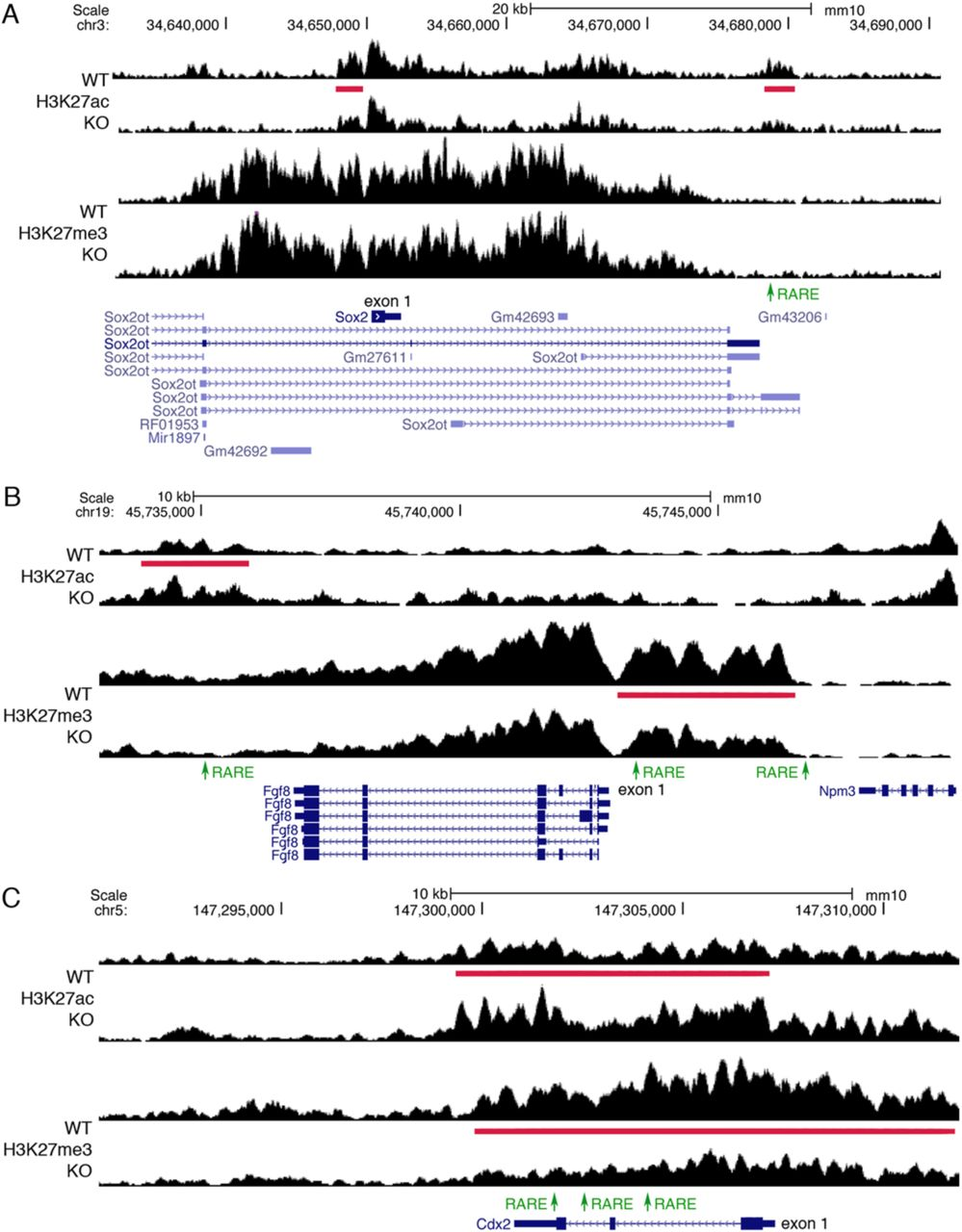 Analysis of differential gene expression of new RA target genes by qRT-PCR analysis of E8.5 wild-type vs Aldh1a2-l-trunk tis sue.