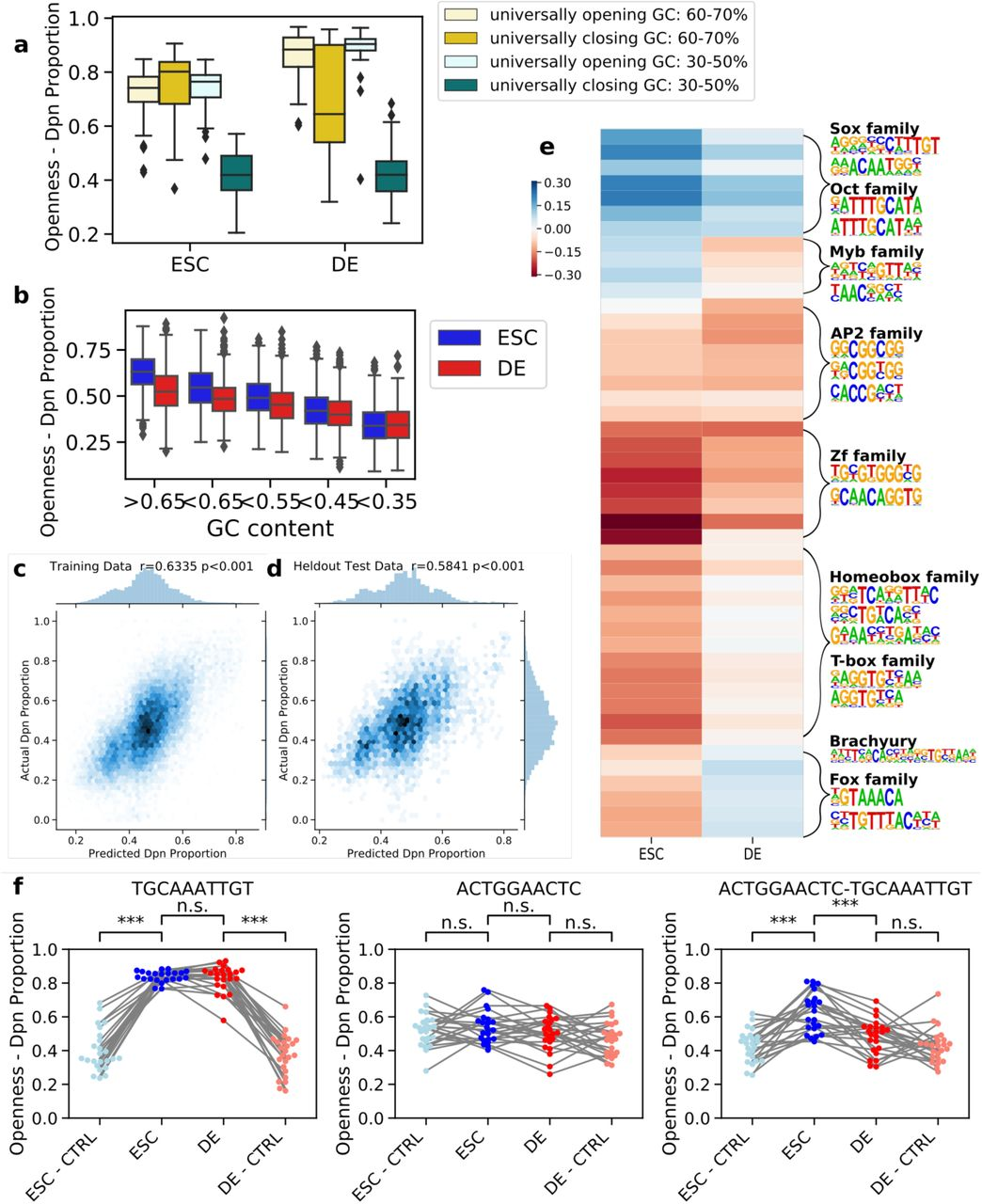 MIAA identifies global influence of GC-content and differentially accessible motifs. A) GC-content observed to be correlated with accessibility in both stem and endoderm cells from positive (universally opening) and negative (universally closing) control sequences. B) GC-content correlated with accessibility in random DNA phrases. The regression model was trained on MIAA Dpn proportions with GC-content, replicate, and cell type-specific effects of 20 motifs and 26 motif pairs as features, and predicts well on (C) training data (n = 21,420) and (D) held-out test data (n = 4,404). The correlation reported is the Pearson correlation coefficient (r). E) Regression weights of individual motifs and motif pairs in stem and definitive endoderm cells. Hierarchical clustering of regression weights followed by motif enrichment recovers clusters representing cell type-specific transcription factor DNA binding motifs. F) Example of individual motifs (left, middle) which alone do not differentially open chromatin, but differentially open chromatin stem cells in combination (right). Each dot represents the average DpnII read proportion of an individual phrase, compared to shuffled controls (CTRL). Significance computed by paired t-test.