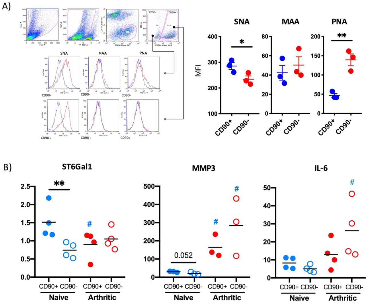 Reduction of α2-6 sialylation and ST6Gal1 levels is observed only in sublining CD90+ synovial fibroblasts. a) Synovial fibroblasts from healthy mice were isolated from mouse joints and identified by flow cytometry as in Fig. 1 (Zombie Violet-, CD45-, CD31-, Podoplanin+), separated into CD90+ and CD90-populations and stained with the biotinylated lectins SNA, MAAII and PNA and streptevadin-PE-Cy7. Graphs show the Mean Fluorescence Intensity for each cytokine and each dot represent cells from one individual mouse (n=3). b) Synovial fibroblasts from healthy and arthritic mice (n=4) were isolated from mouse joints as in (a) and RNA was purified using the RNeasy Mini Kit (Qiagen) according to manufacturer's instructions. Expression of IL-6, MMP3 and ST6Gal1 mRNA was quantified by RT-qPCR. Statistics: one tail unpaired t-test was used for statistics, **p
