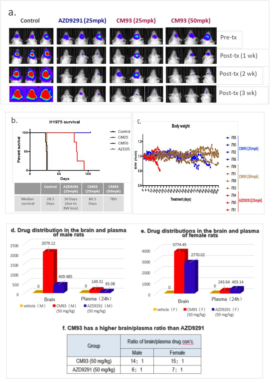 CM93 targets the brain more effectively in a mouse model of H1975 NSCLC brain metastases. Evaluation of CM93 and AZD9291 in SCID mice bearing EGFR-mutant NSCLC brain metastases (H1975-luc). (A) Imaging of CM93 treated mice with EGFR-mutant NSCLC brain metastases in comparison with AZD9291; (B) survival curves of brain metastases mice after treatment of CM93 and AZD9291; (C) Body weight (BW) loss in tumor-bearing mice treated with AZD9291 (25mpk) or CM93 (25 and 50 mpk). (D-F) Brain and plasma distributions of CM93 and AZD9291 (50mg/kg po., qd x 7 days) in male (D) and female (E) rats. Drug concentrations were measured by HPLC.