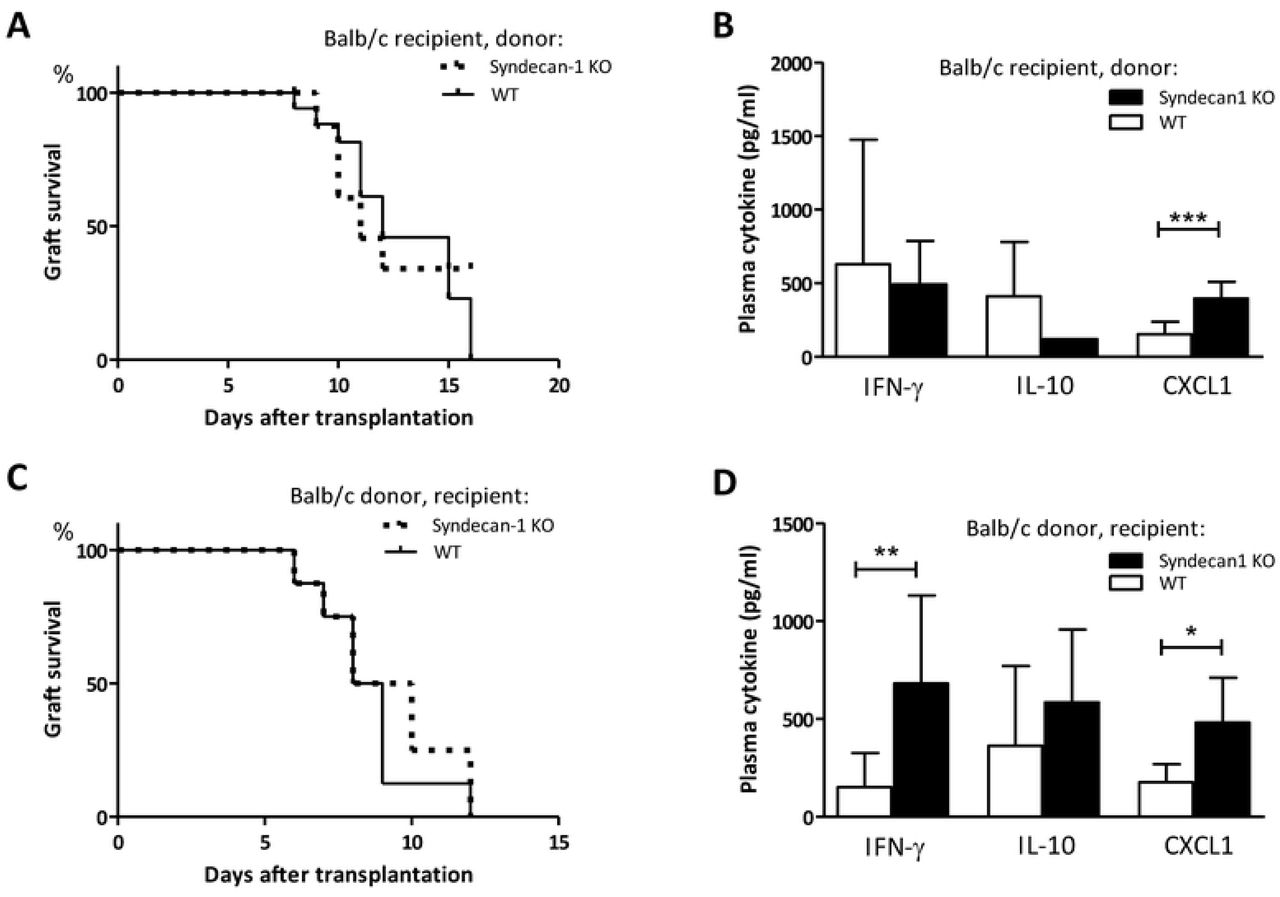 Sdc-1 deficiency affects cytokine levels in allograft recipients without affecting allograft survival. Allograft survival in a fully mismatched heterotopic heart transplantation model. Hearts were obtained from Sdc-1-deficient (n=9) or WT mice (n=8) and transplanted in Balb/c mice (A). Plasma cytokine levels in Balb/c recipient mice that received WT or Sdc-1 deficient hearts (B). Allograft survival of Balb/c hearts in WT (n=8) or Sdc1-deficient (n=8) recipients (C). Plasma cytokine levels in WT or Sdc-1 deficient recipients that received a Balb/c heart (D). * p